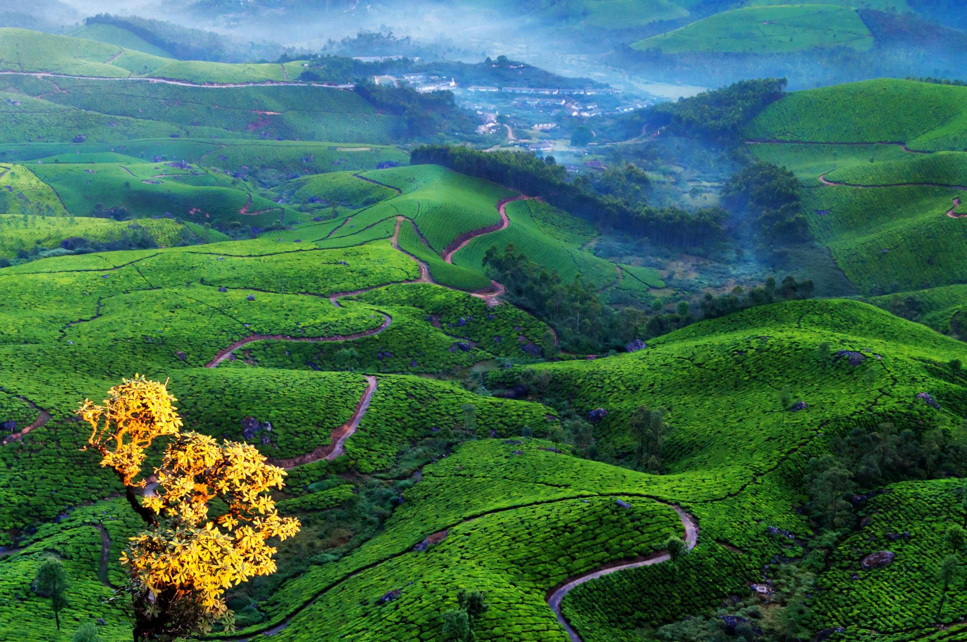 Kerala - A Road Trip With Ashraf