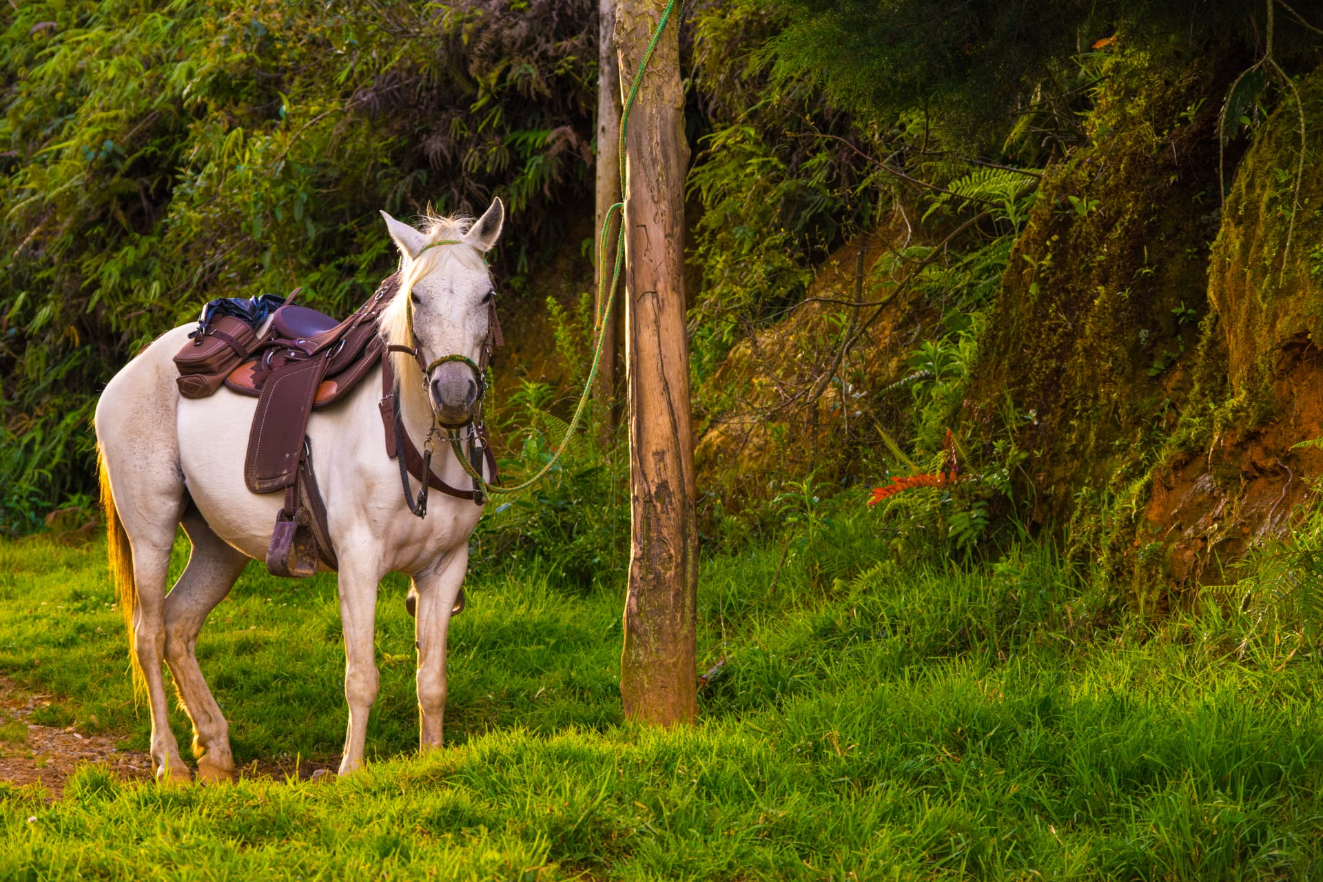 Medellín - Colombian Horses - Fantastic Animals who Changed our History