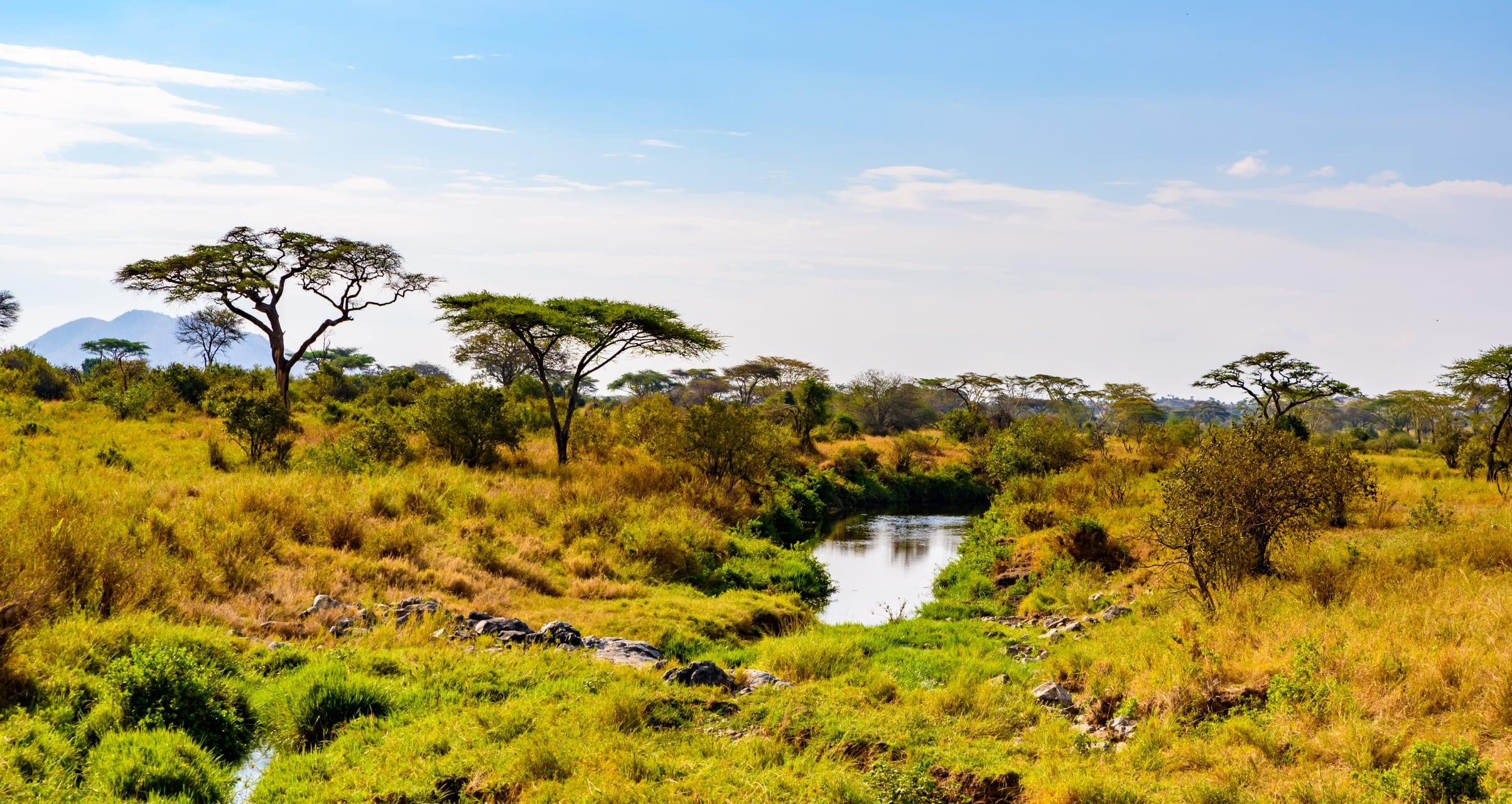 The Serengeti - The Serengeti National Park
