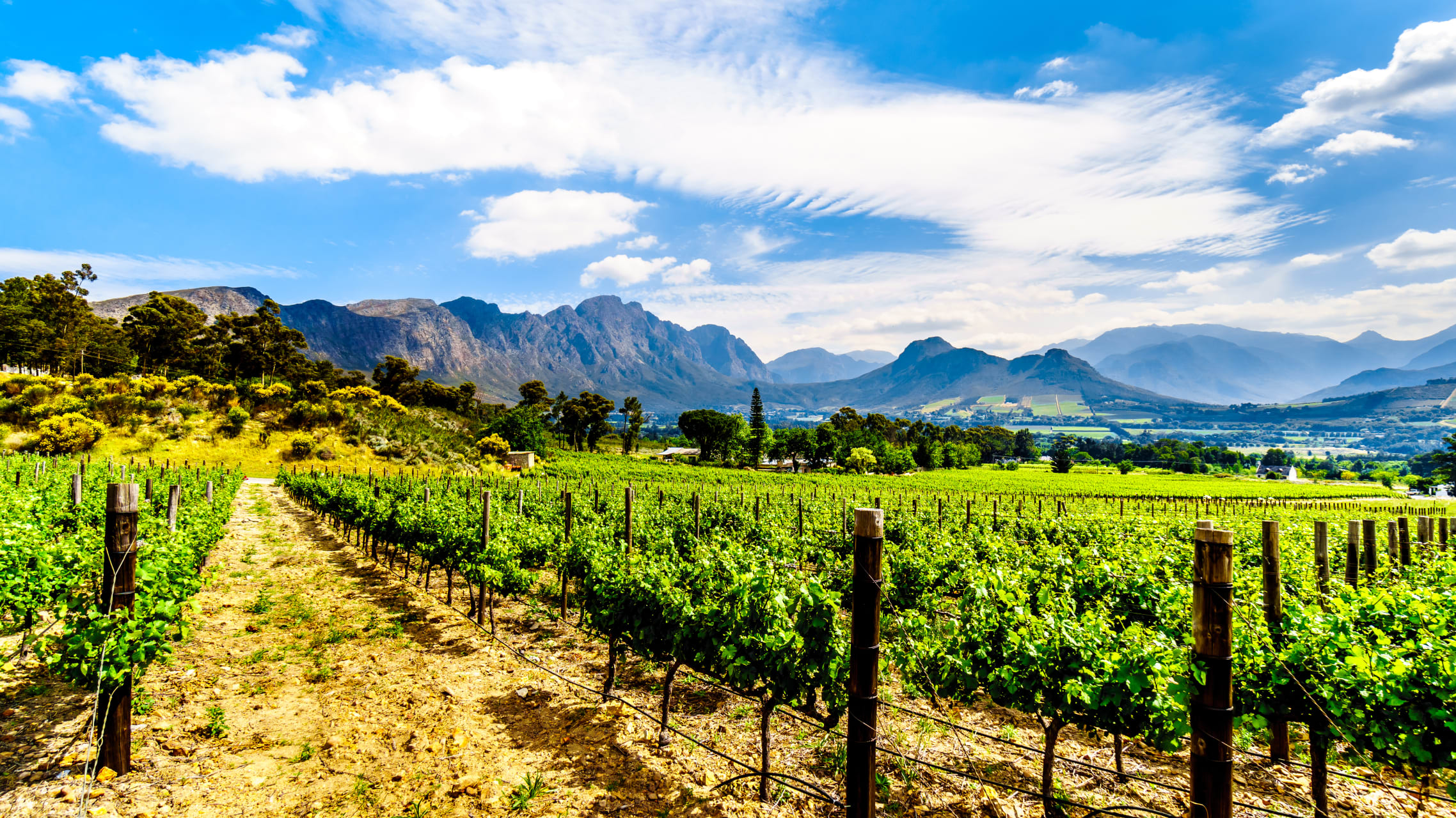 Cape Town - Franschhoek: a Little Piece of France in South Africa