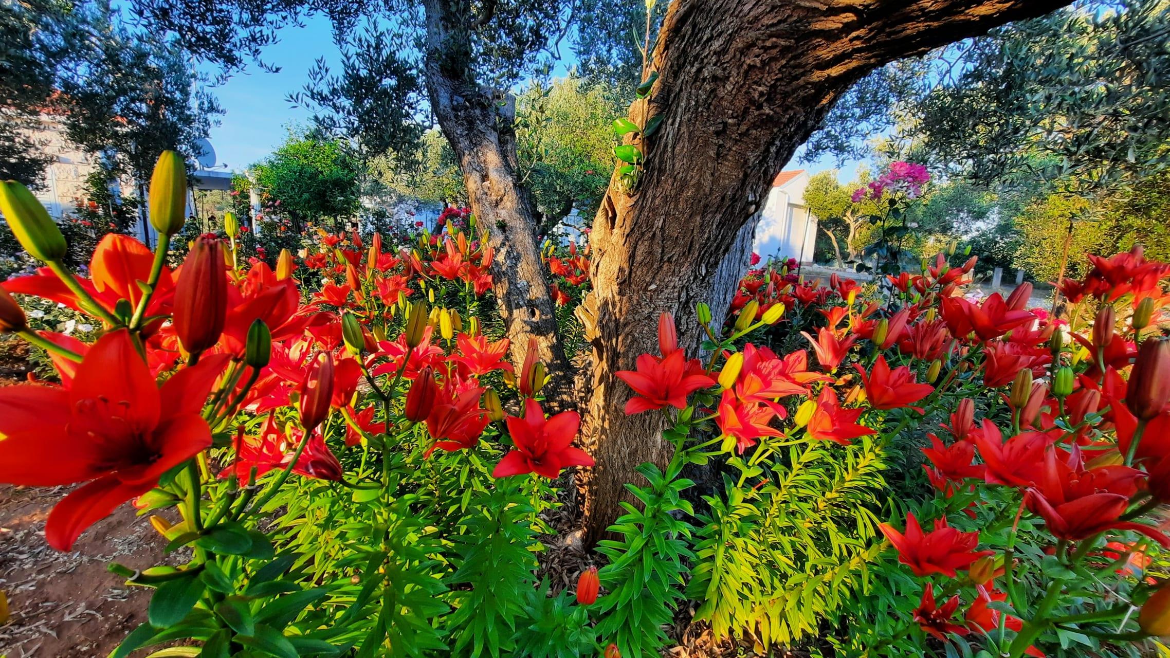 Korcula - Lilies Carnations Petunias Roses & Smurfs