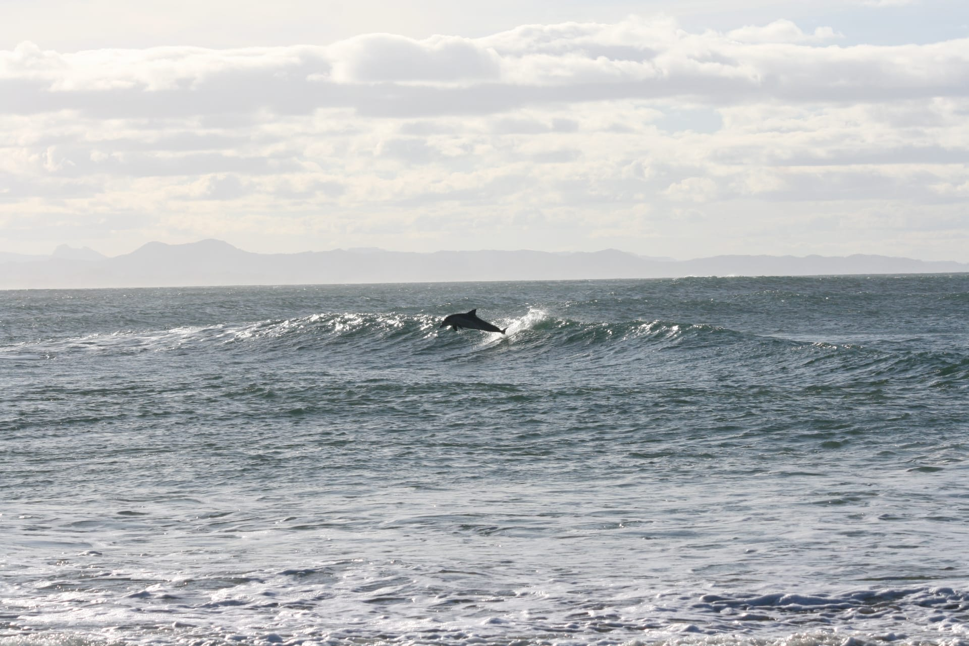 New South Wales - Road Trip Special: Relaxing Walk on Australia's Dolphin Beach