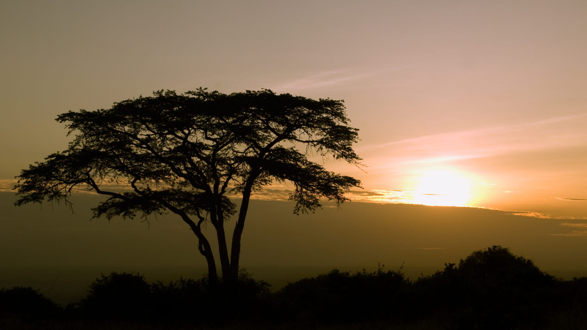 Nairobi - Sunrise on the Savannah: Waking up with Nairobi National Park when the animals come out to play