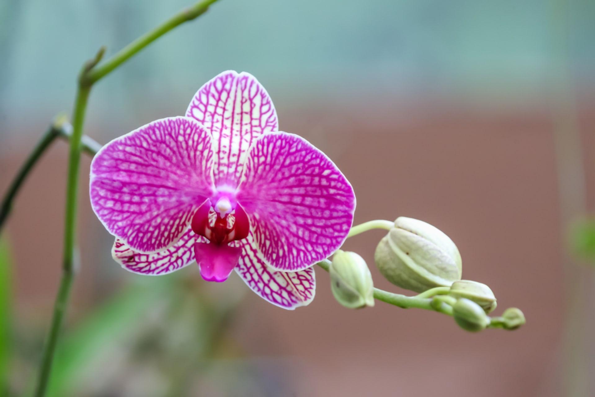 Quito - Orchid fest