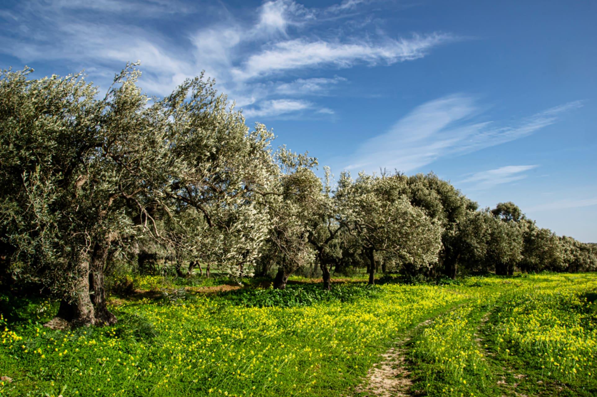 Sardinia - Chatting and Strolling around Sardinian Countryside