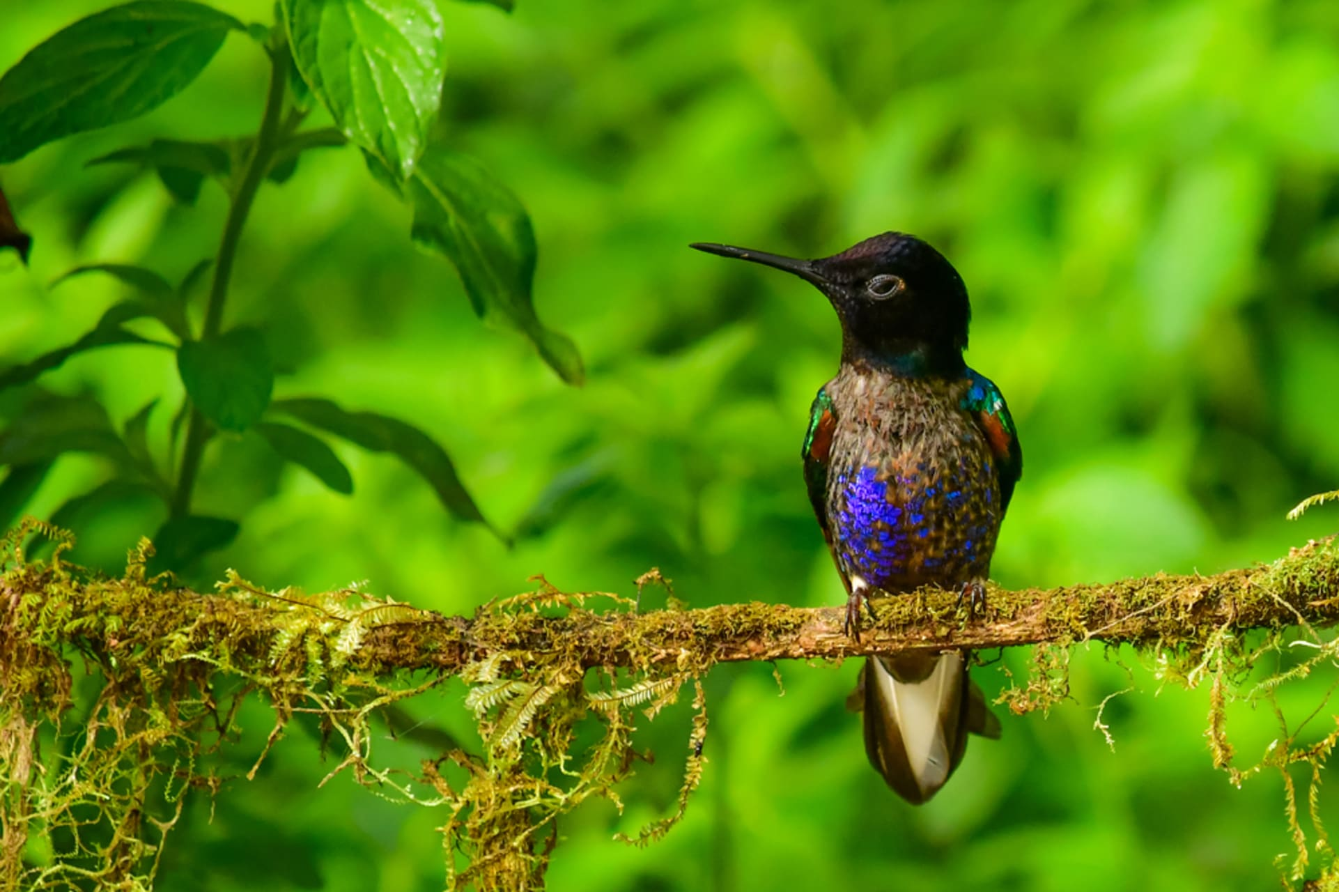 Mindo - Hummingbirds and Orchids Tour