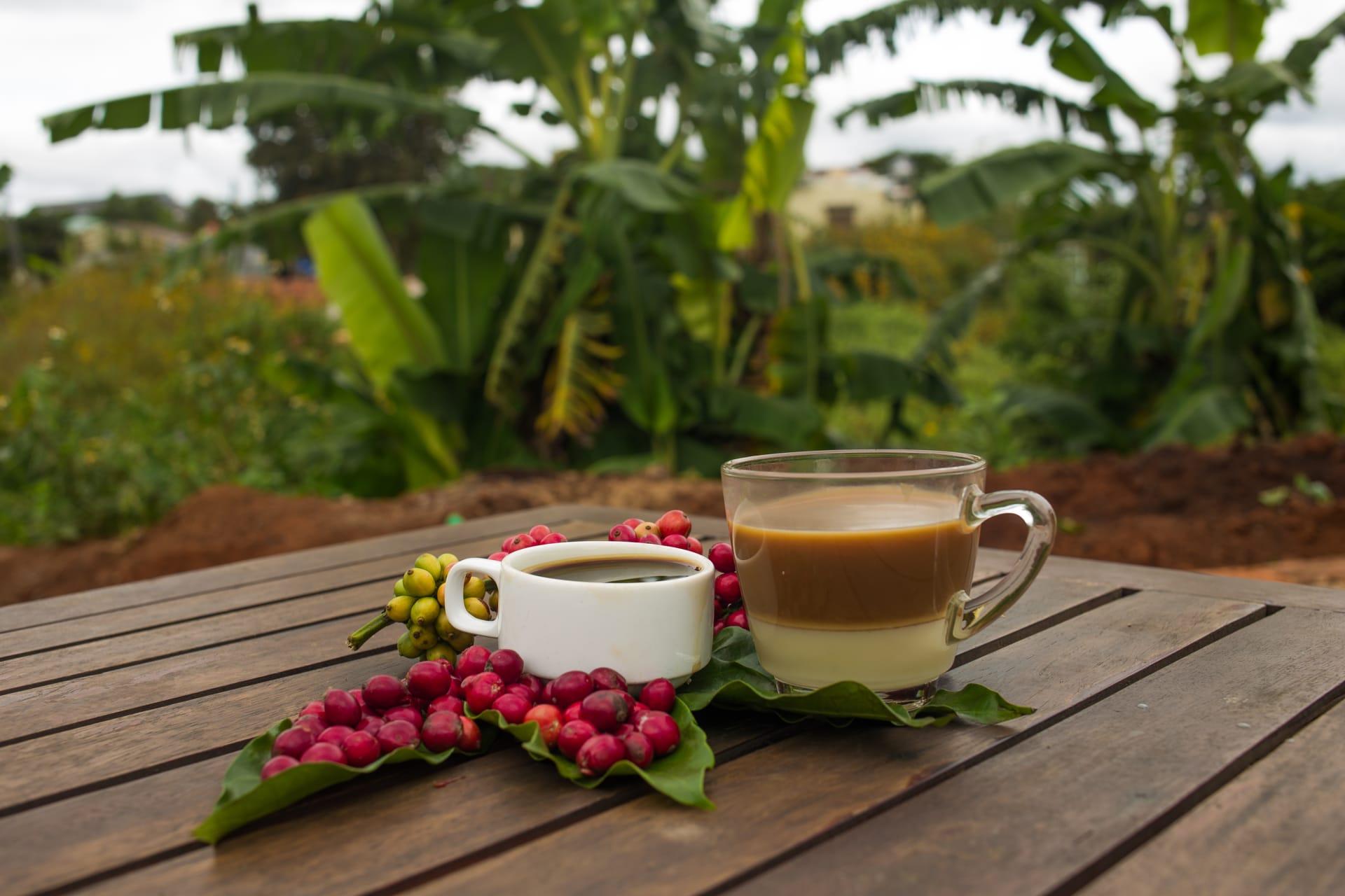 Nairobi - Wake Up and Smell the Kenyan Coffee