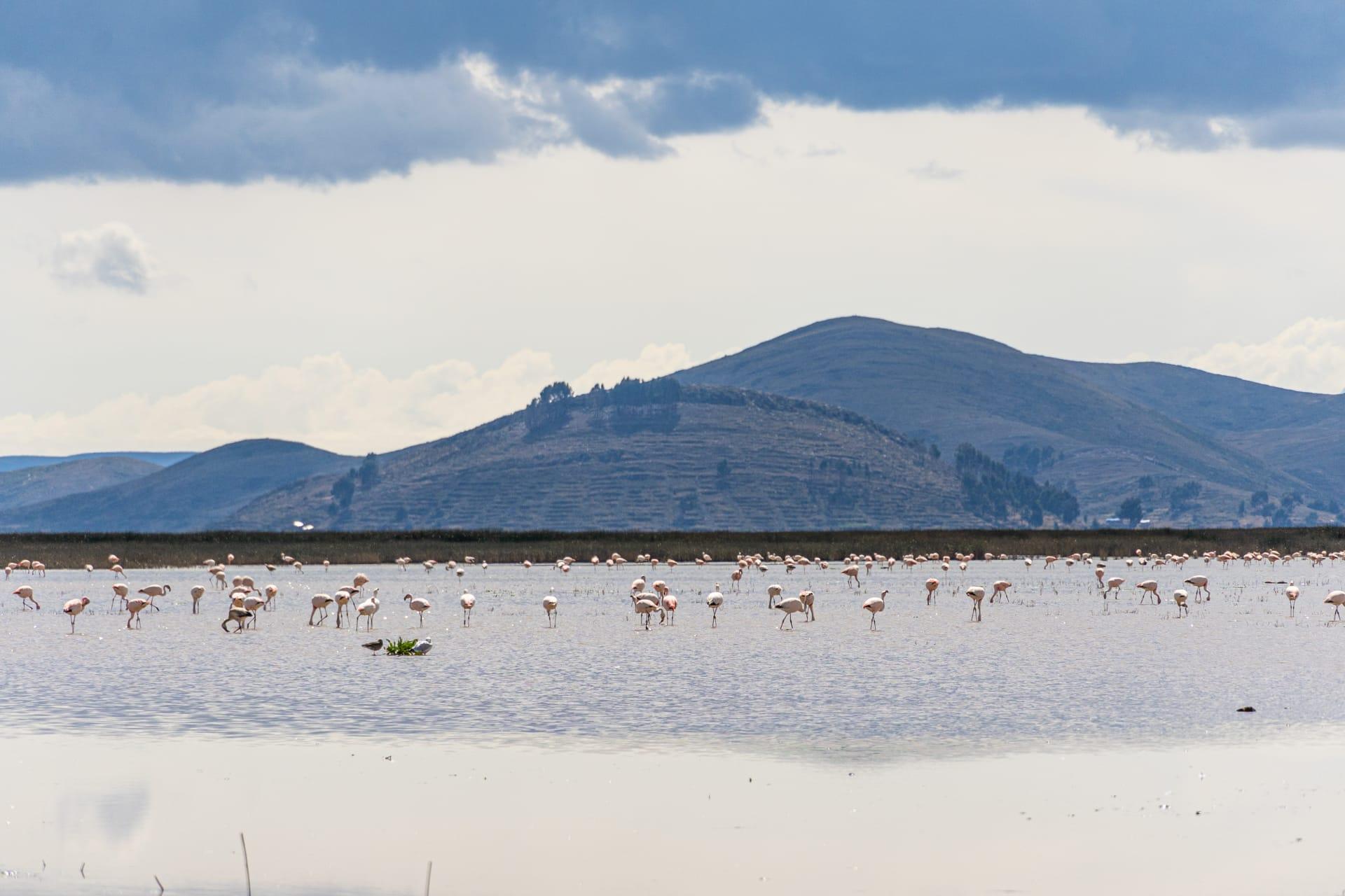 La Paz - Humamarka, a Bird's Eye Viewpoint on Lake Titicaca