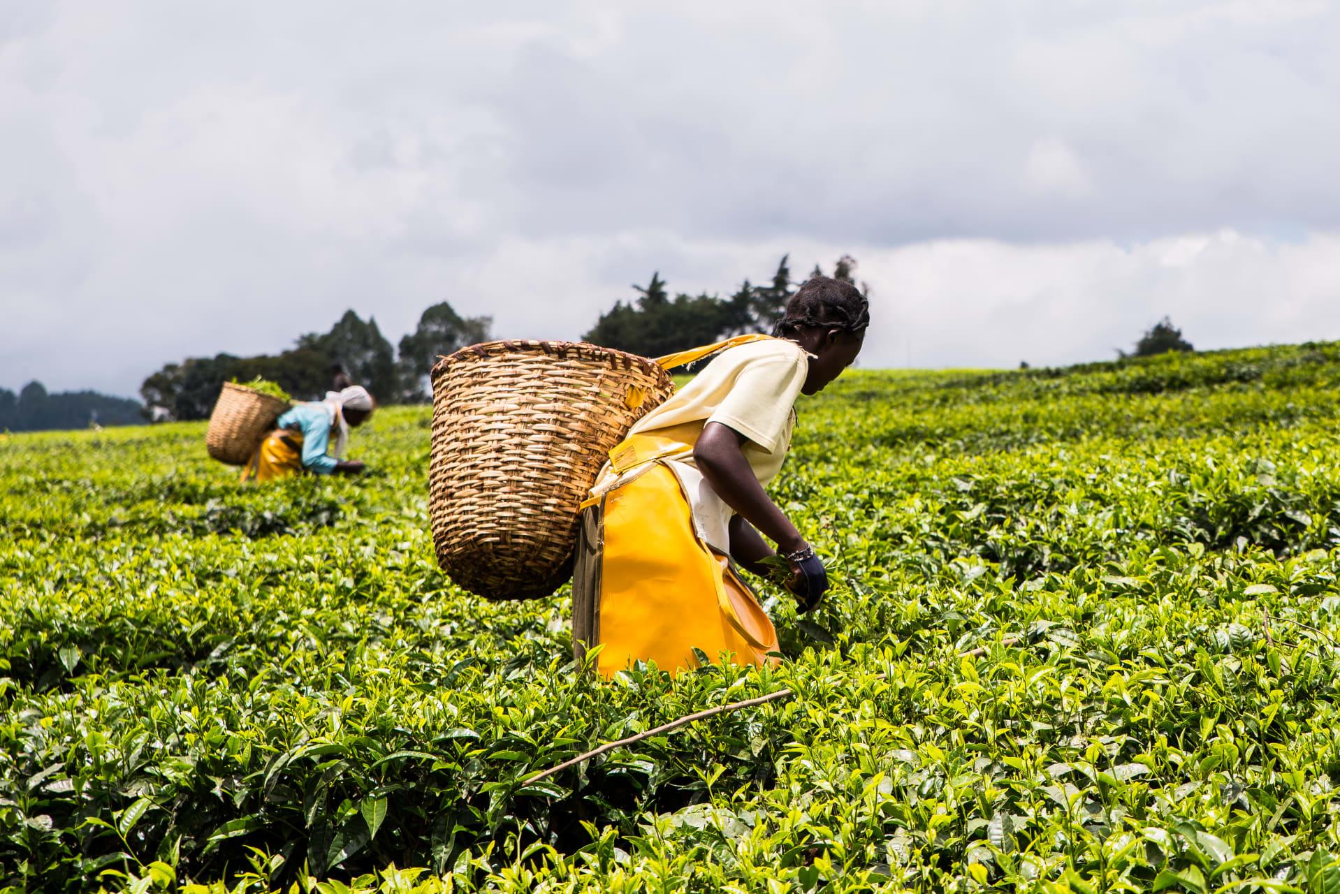 Kampala - Namalere Agricultural Centre