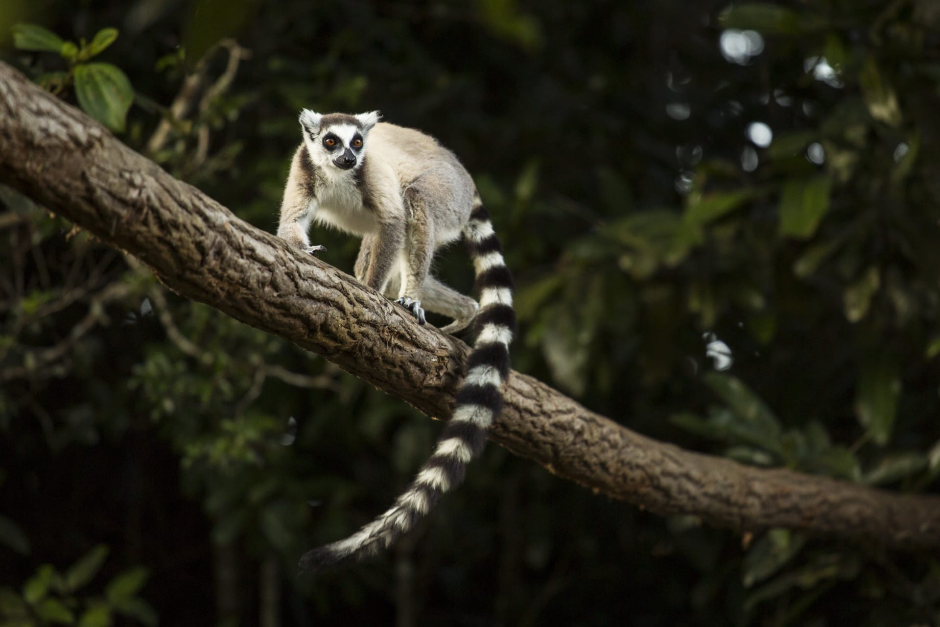Mantasoa - Walking Tour with King Julian (the Ring-tailed Lemur) and Friends