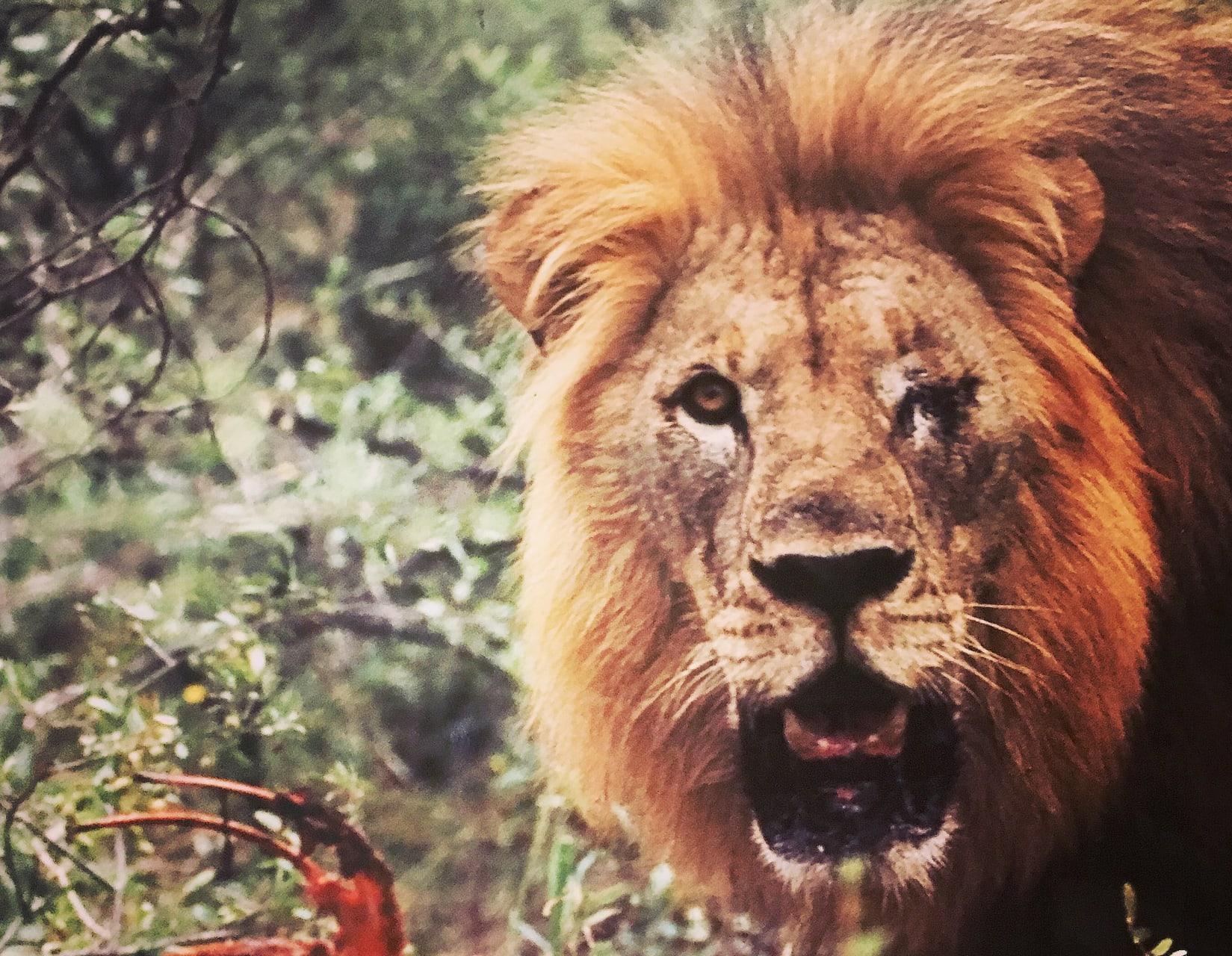 Cape Town - Safari Sunday