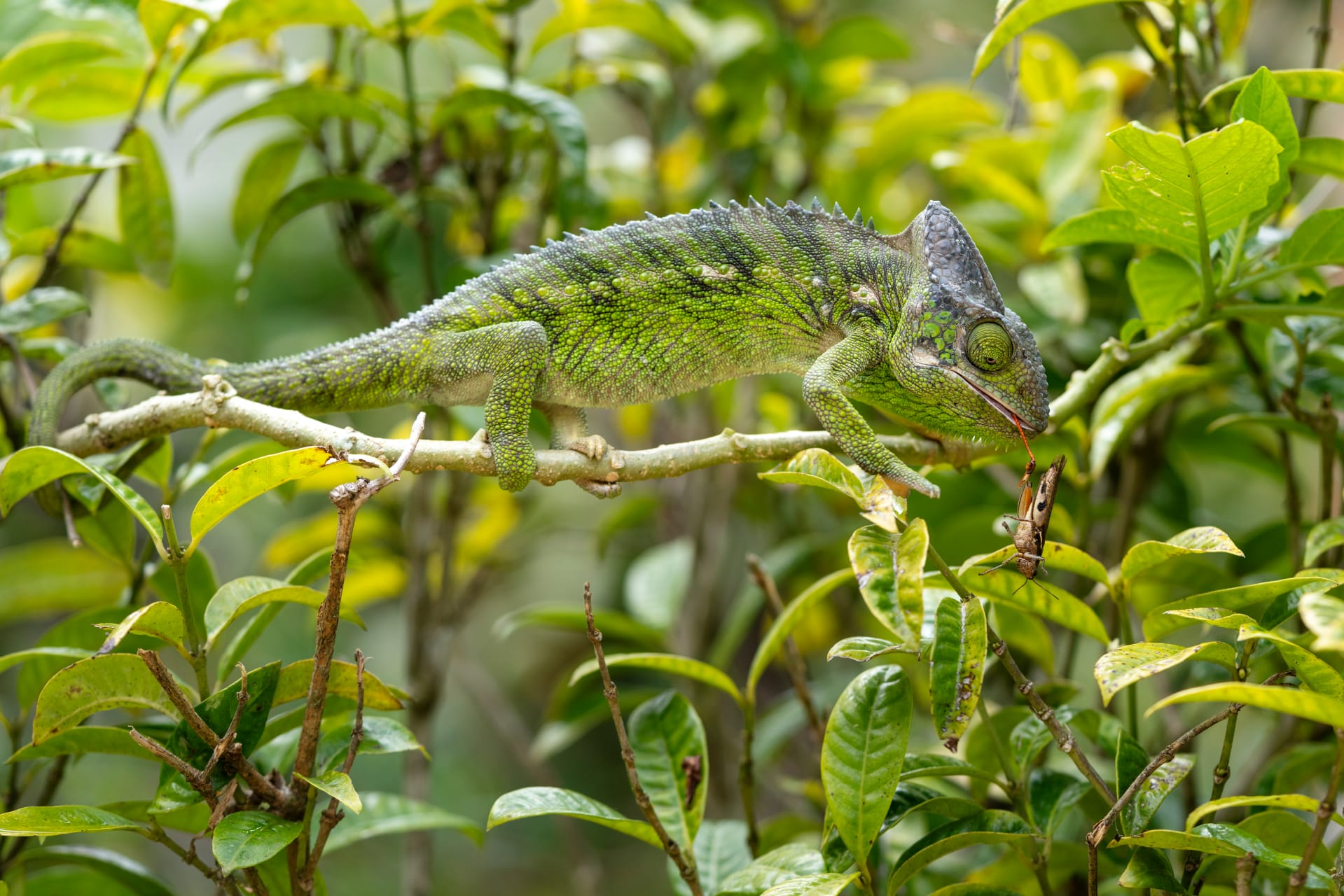 Marozevo - Exclusive Immersion into the World of Chameleons & Geckos
