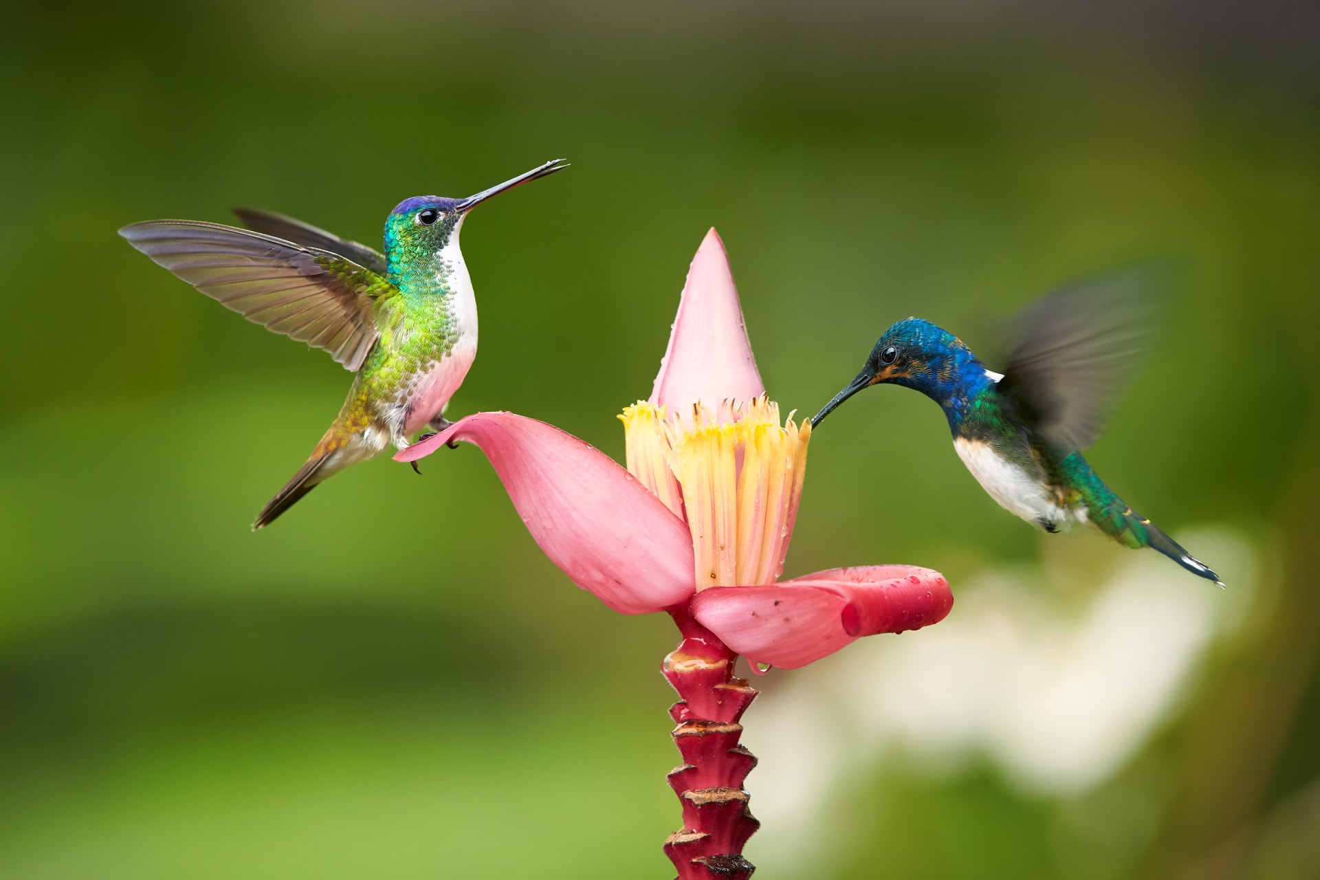 Mindo - ASMR Hummingbirds of the Cloud Forest