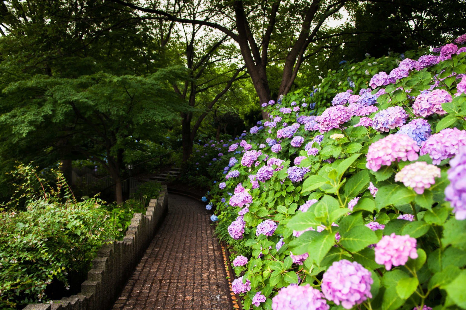 Tokyo - Hydrangea and History of Japanese Ancient Tomb - Limited Time Only