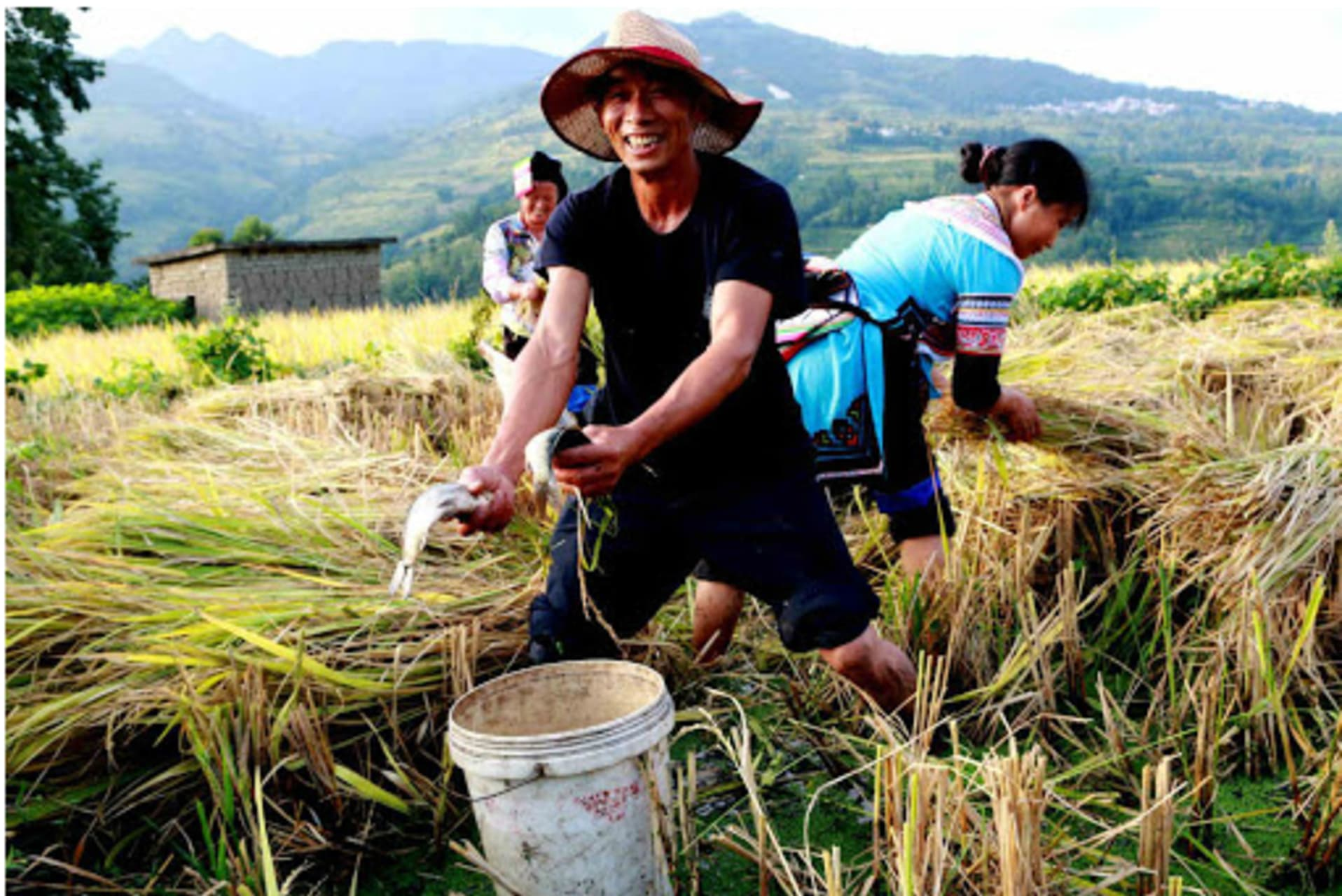 Guilin - Dragon Boat Festival 2021: Catching fish in the Rice Terrace