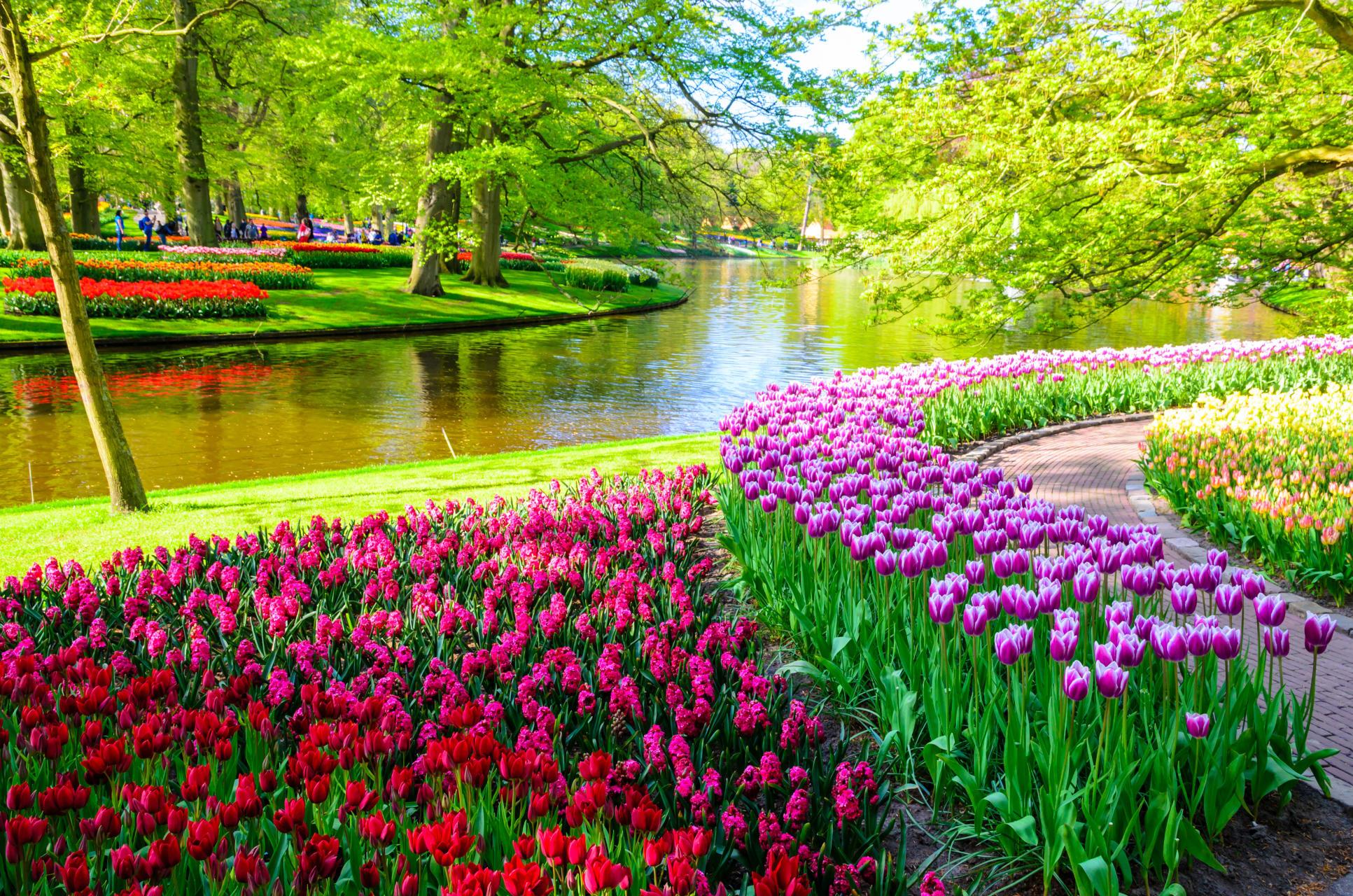 Amsterdam - Millions of Flowers in the Keukenhof Gardens