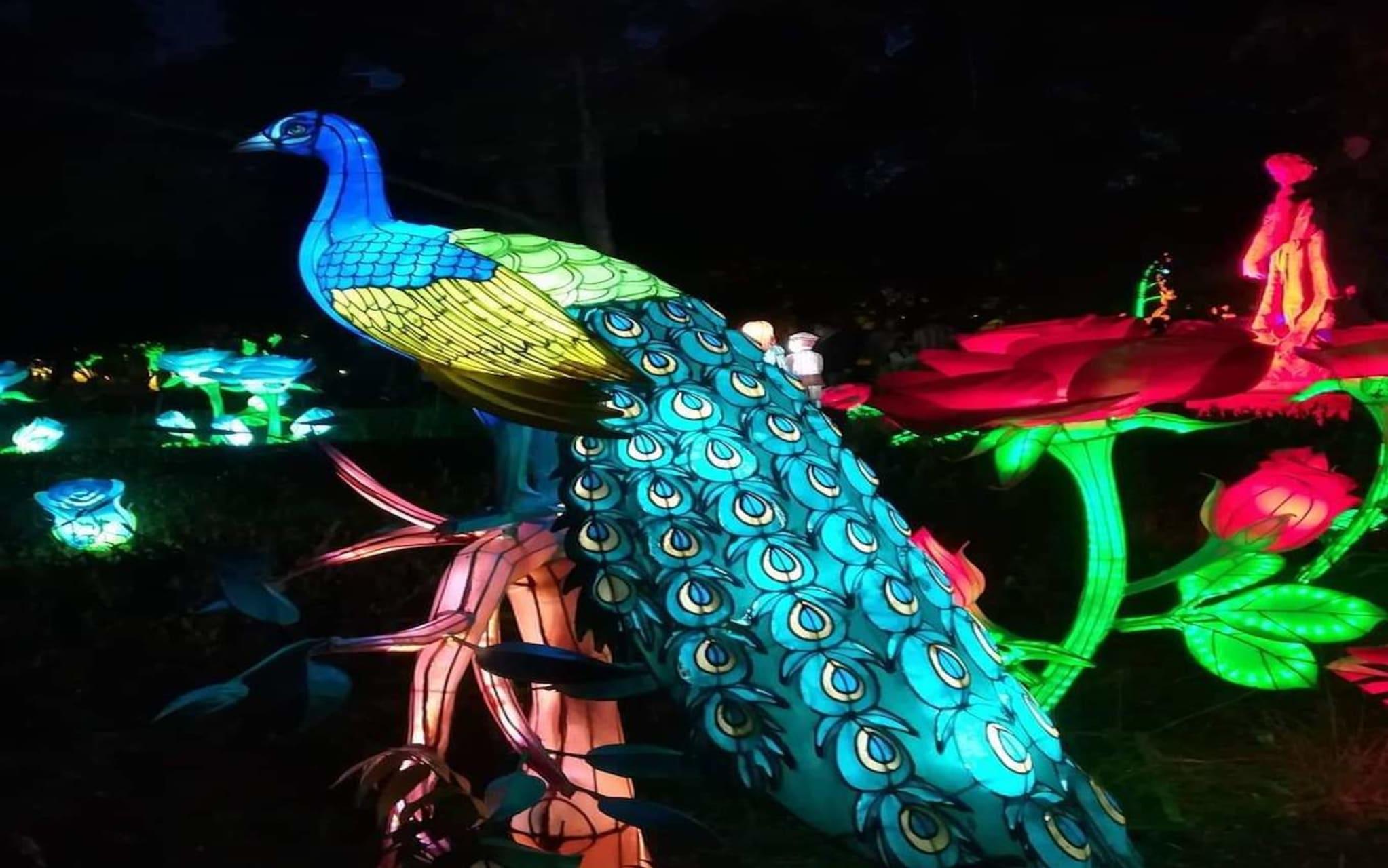 Porto - Magical Garden - An Immersive Nature Show