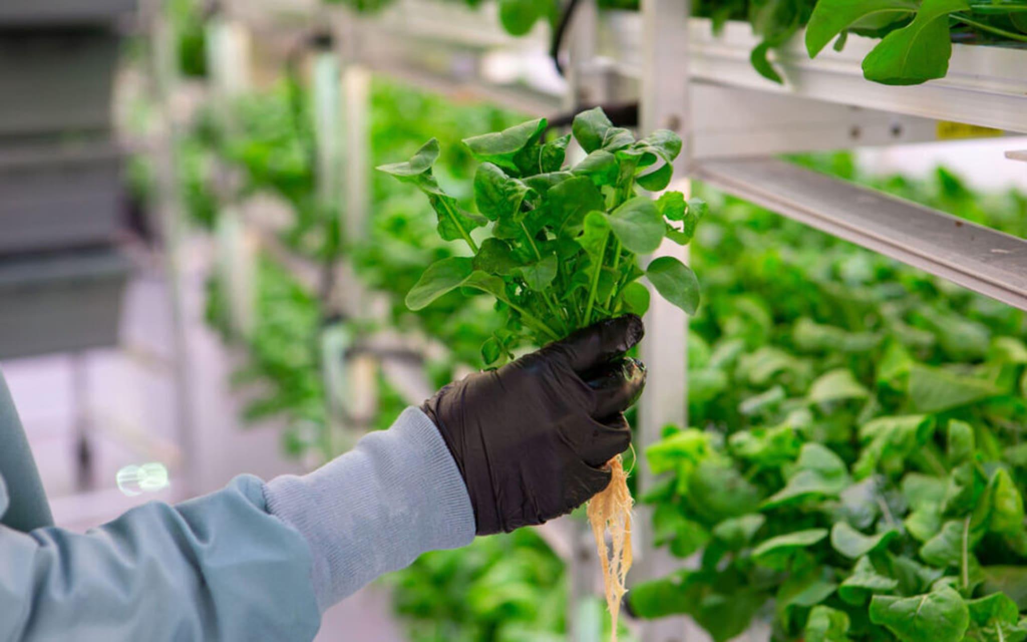 Harare - Learn about Hydroponics farming and explore Pomona Market