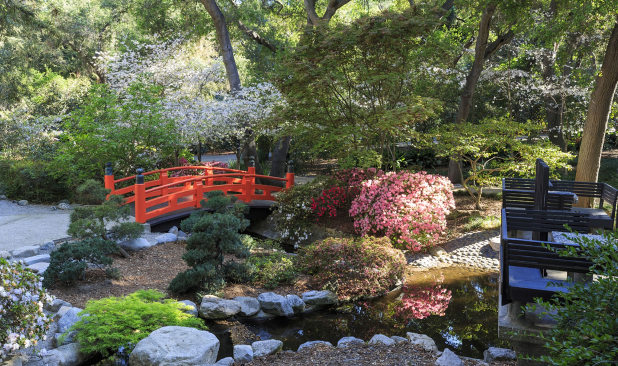 Los Angeles - Gardens of Los Angeles: The Camellia Forest