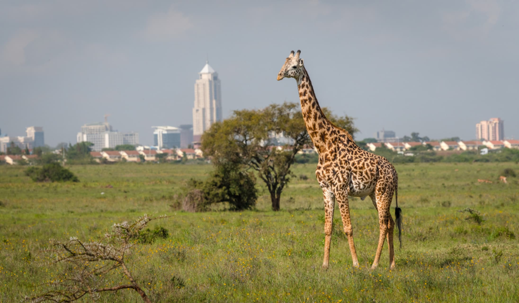 Nairobi - Sundowner and safari in the only national park within a city - Nairobi National Park