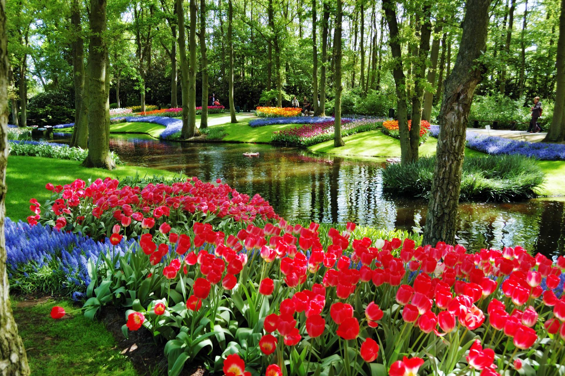 Amsterdam - Keukenhof Gardens and the Extraordinary Story of the Dutch Tulip