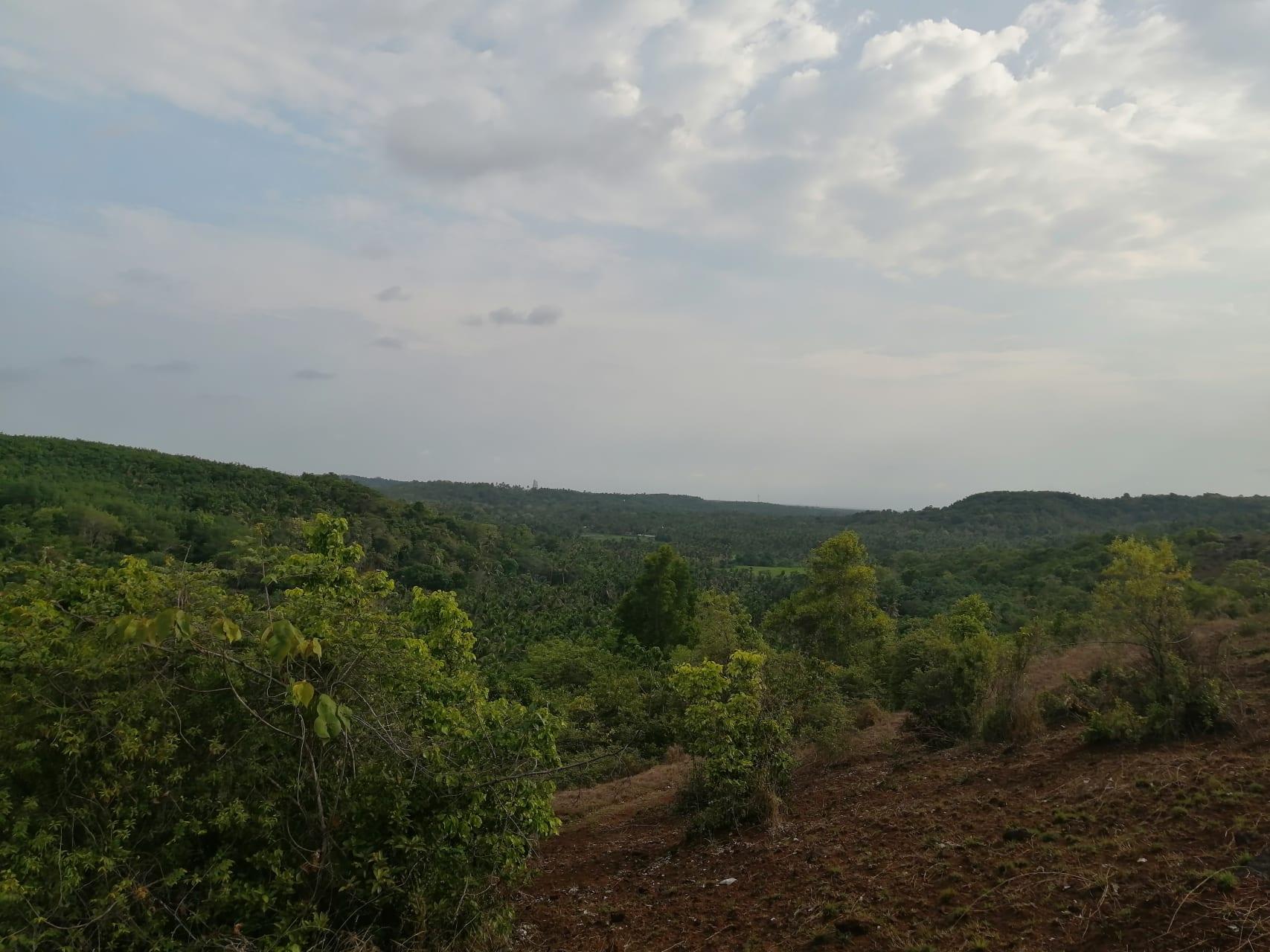 Kerala - Kerala; Hiking through Eliyodumala (Mountain)