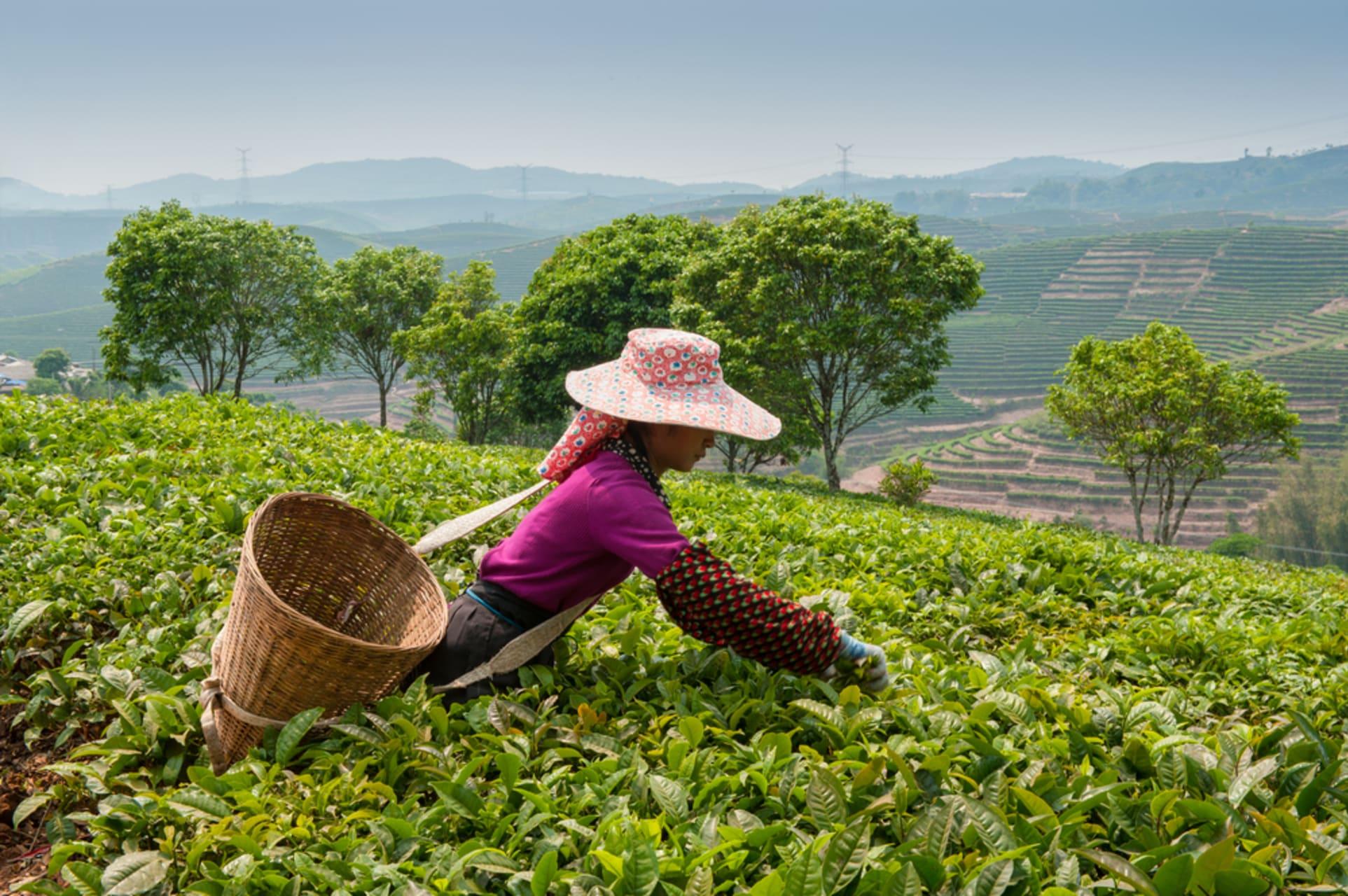 Guilin - Guilin Tea Plantation and Mount Yao