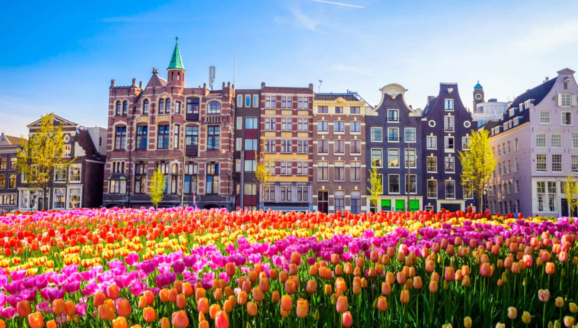 Amsterdam - Tulips from Amsterdam, Cycle in the spring.