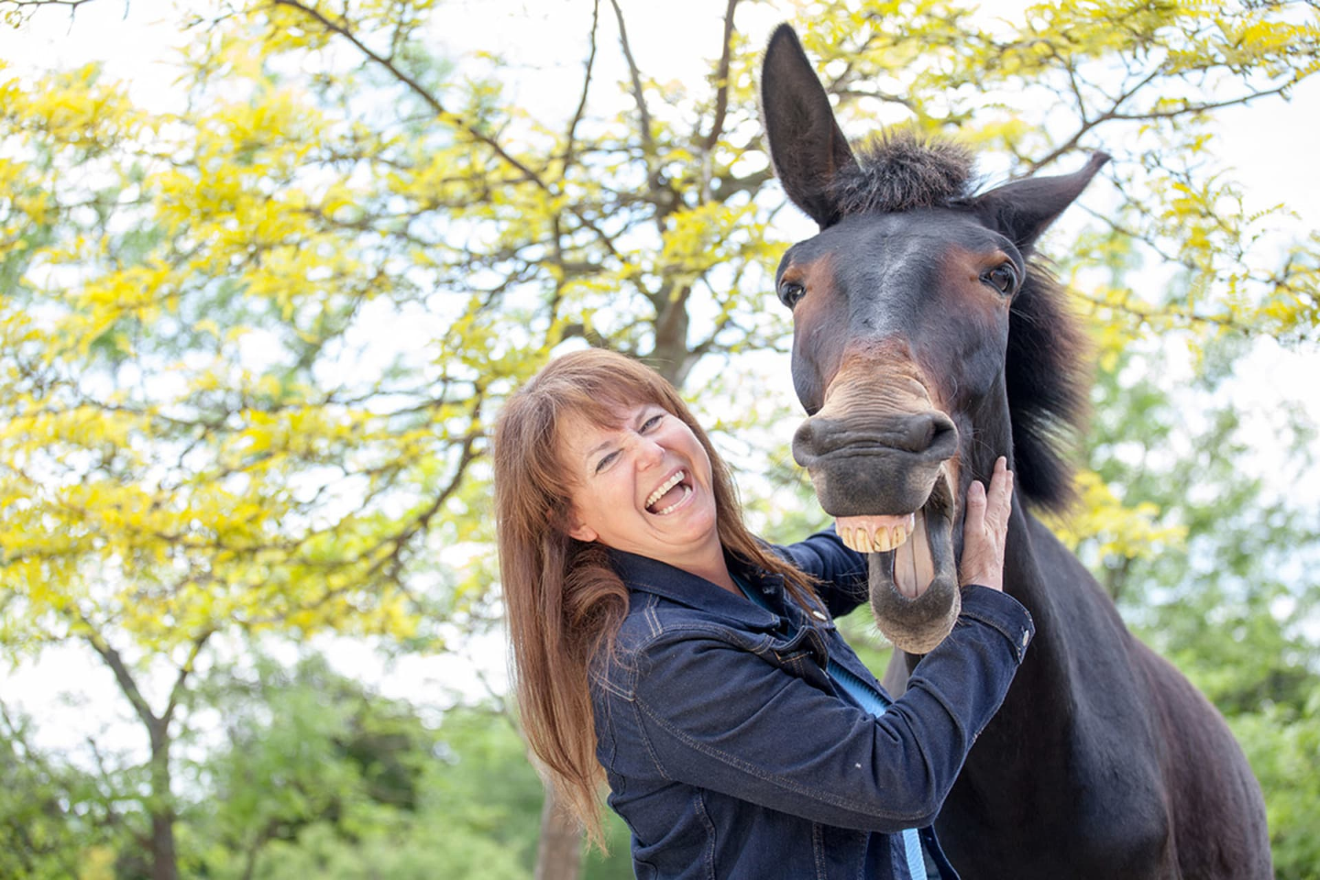 Greater Toronto Area - For the Love of Horses (and a Mule)