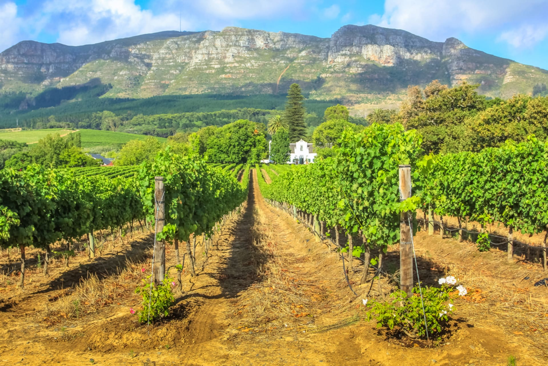 Cape Town - Winemaking and wine farms: when culture meets tradition