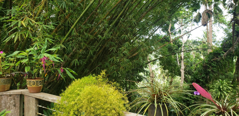 Barbados - Barbados: Flower Forest Botanical Gardens