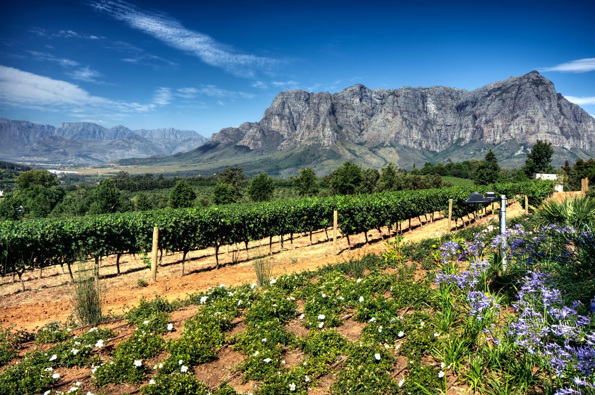 Cape Town - Stunning Historic Stellenbosch