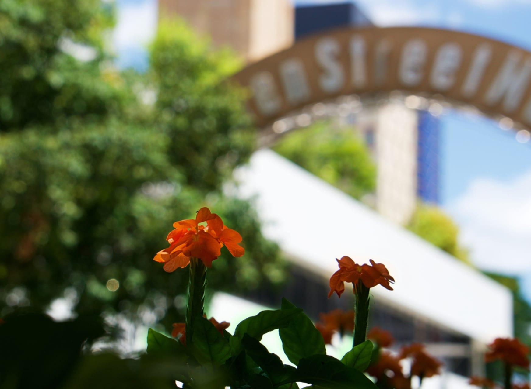 Brisbane - Queen Street Mall:  Brisbane's most famous mall