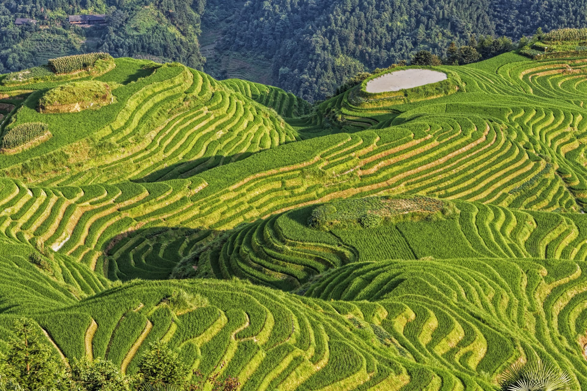 Guilin - Longji Rice Terraces with rural view