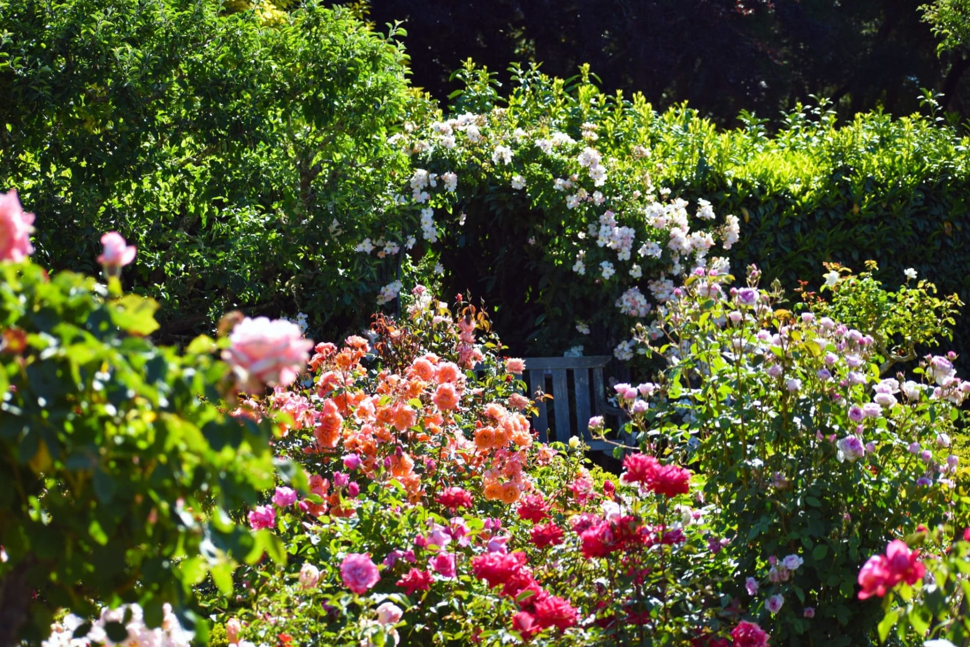 California - Filoli   Rose Garden Tour
