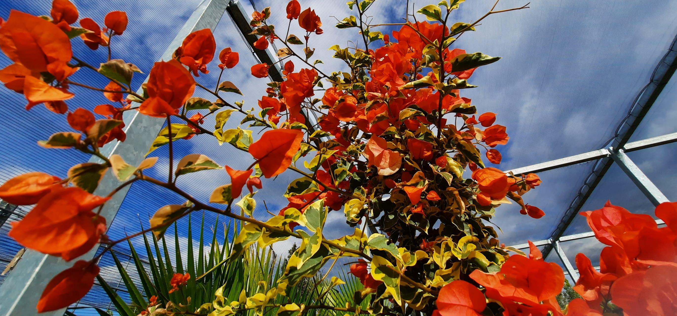 Korcula - Flower Paradise in October, November & December