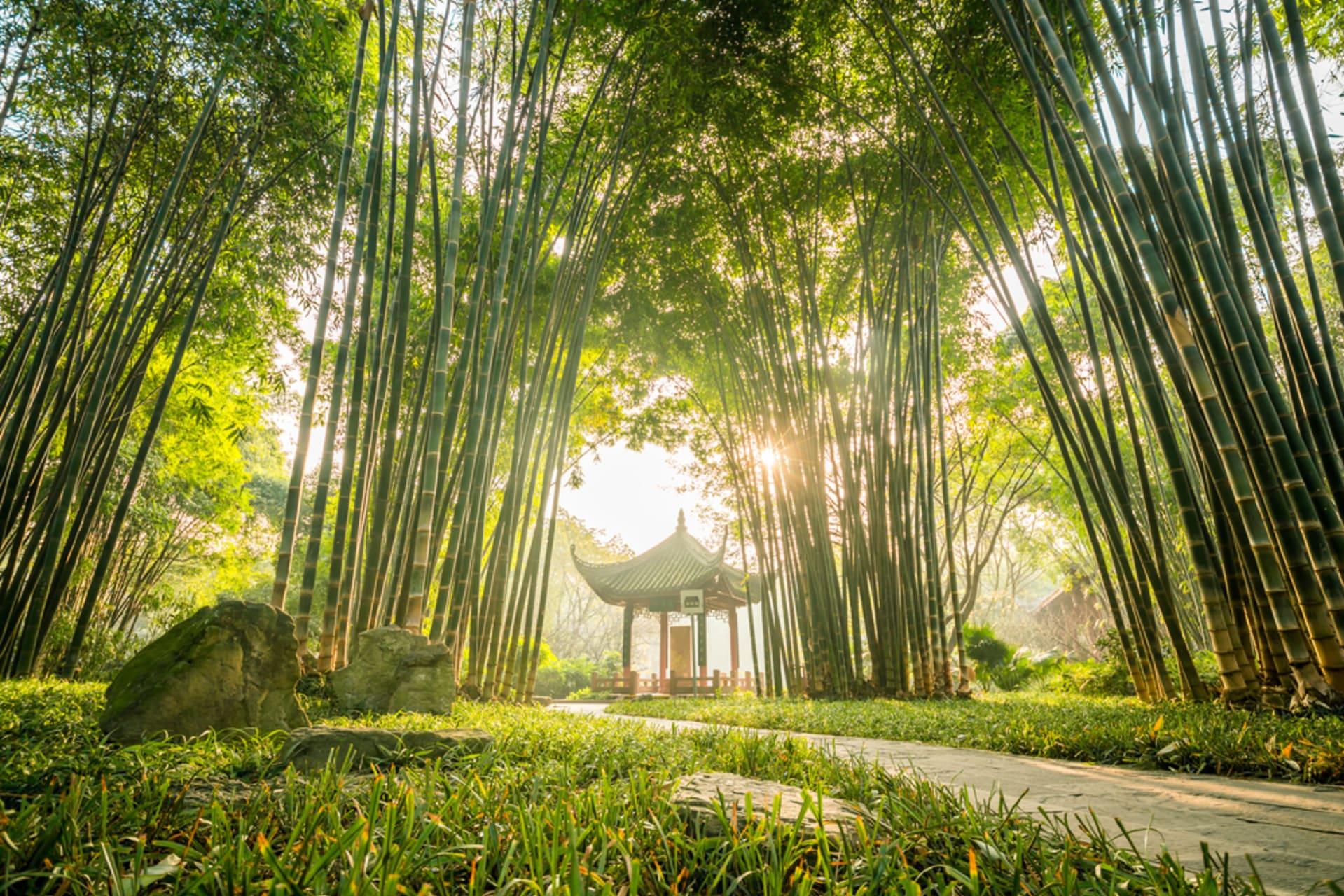 Chengdu - Chengdu Park with Ear-Cleaning Custom