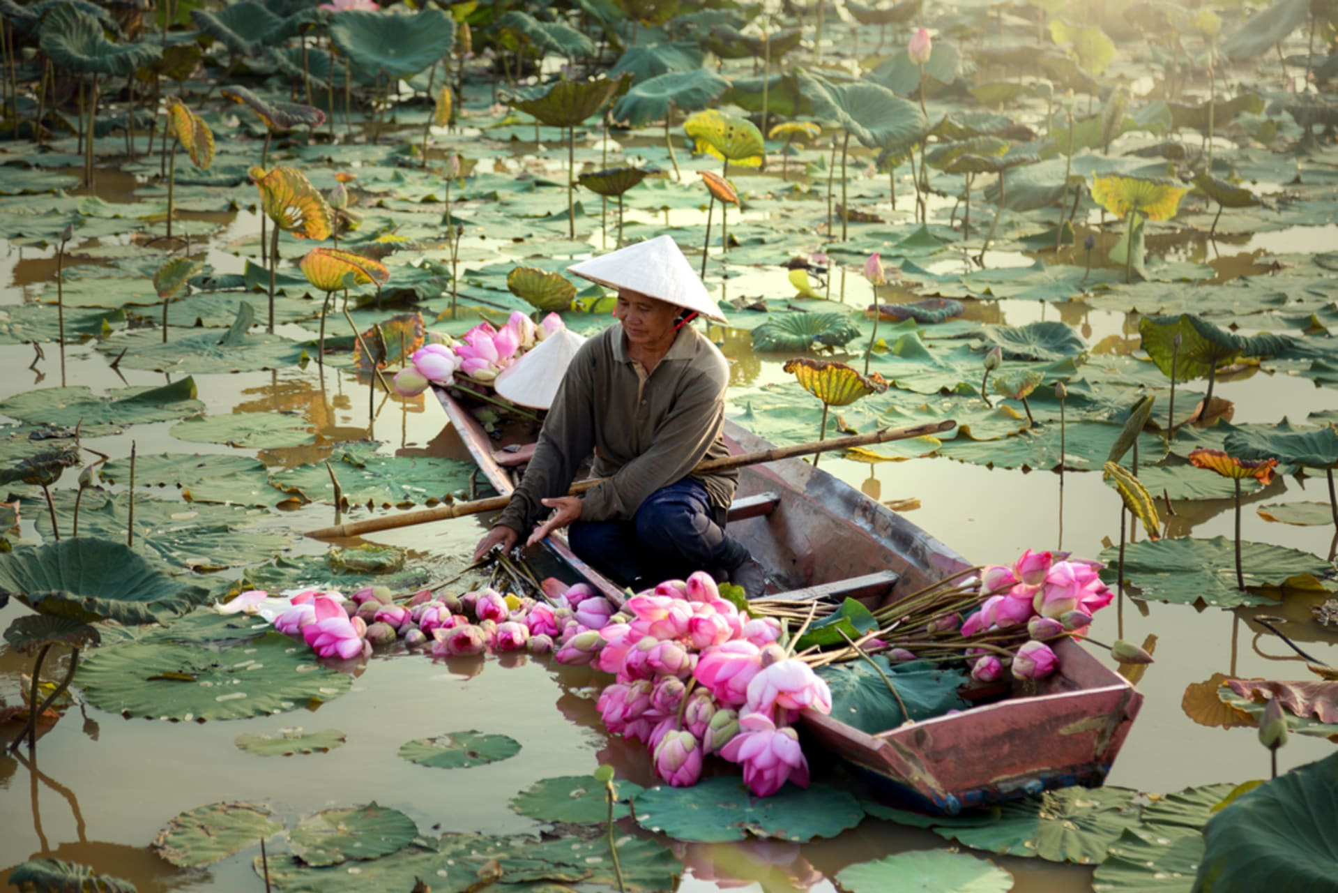 Hue - Hidden Huế - Day 5: Lotus Is Not Just Pretty