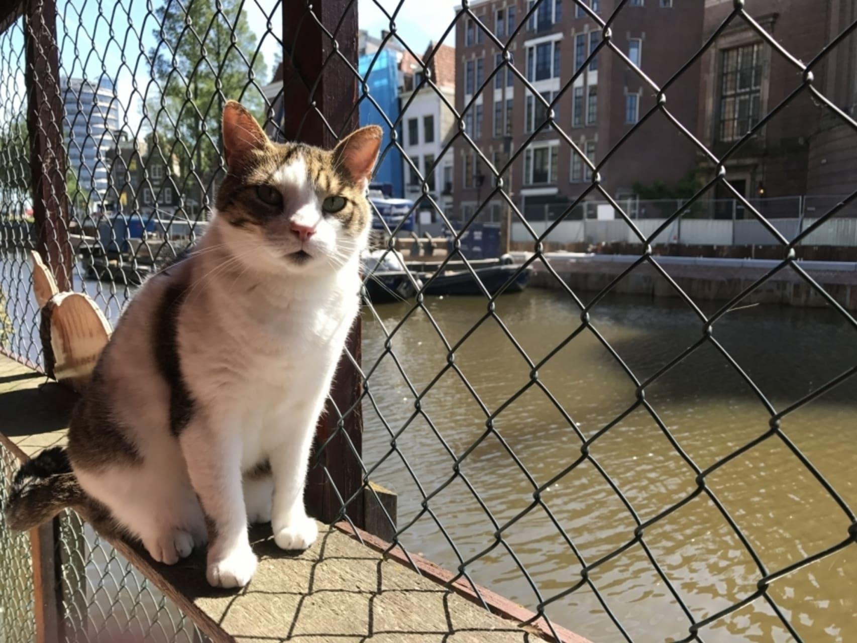 Amsterdam - Amsterdam's Famous Poezenboot (Cat Boat!) Fundraiser