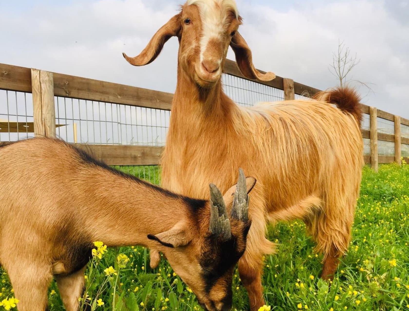 Olesh - Meet the Animals at Freedom Farm Sanctuary - Part 1