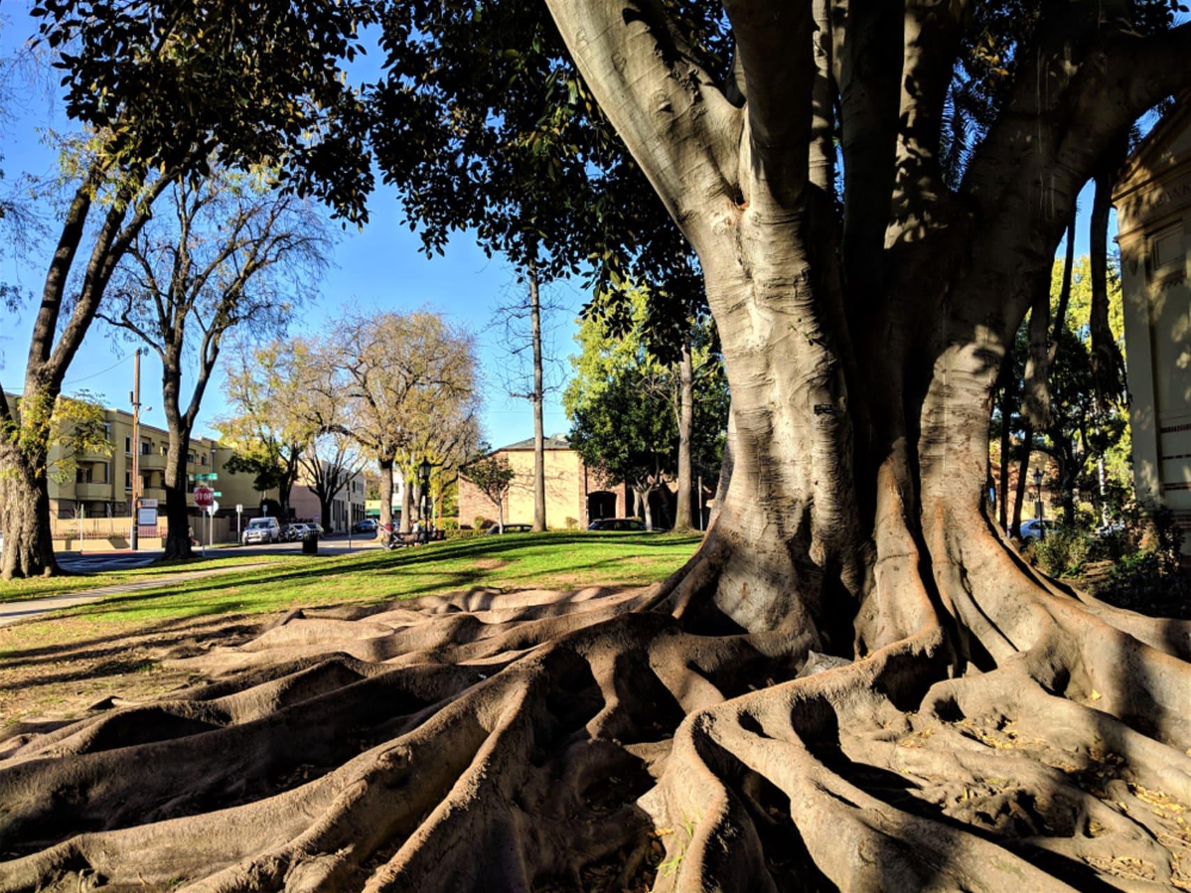 Los Angeles - The Neighborhoods of Los Angeles - Bungalow Heaven