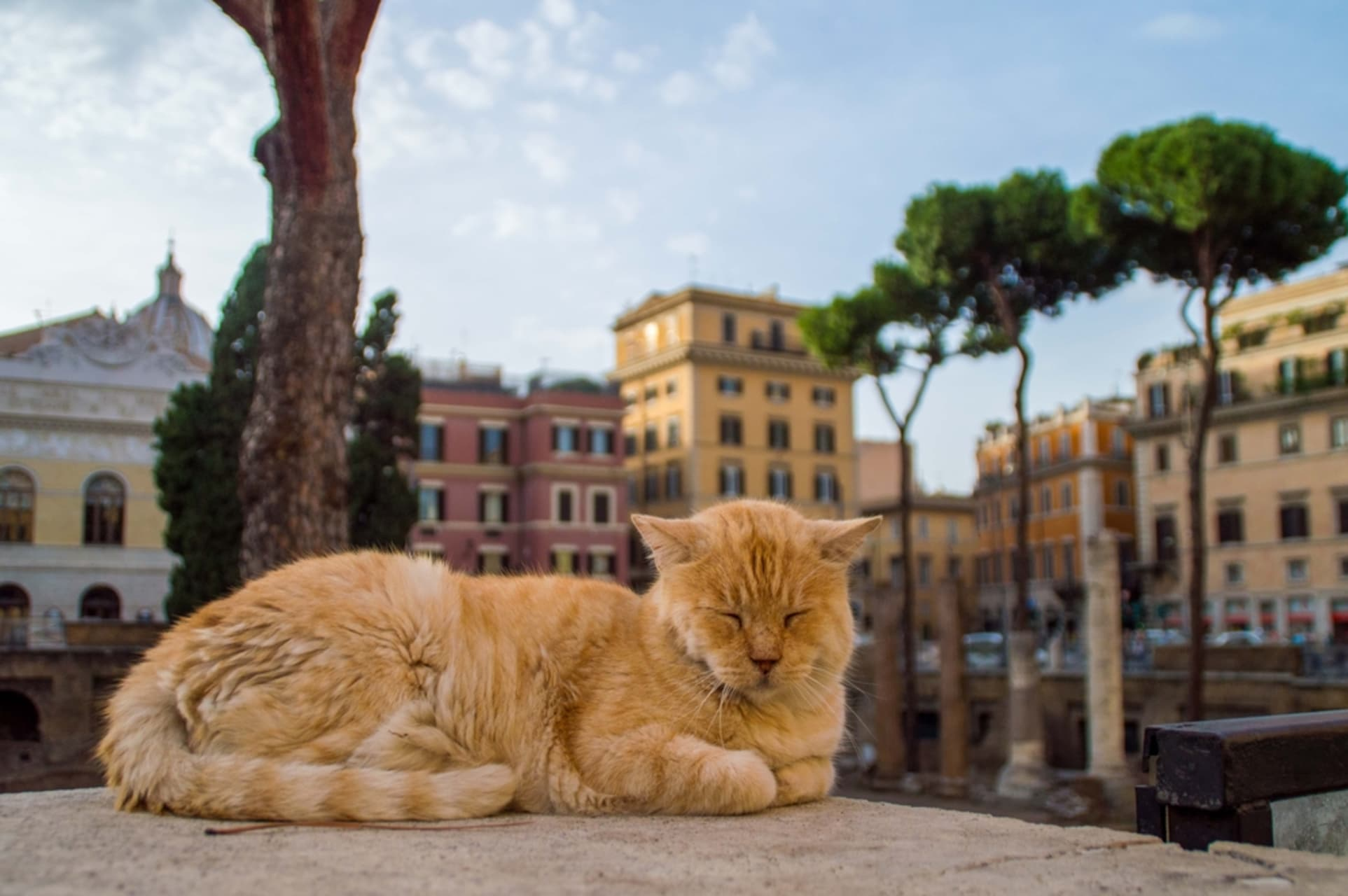 Rome - Ides of March, Julius Caesar & the cats of Rome