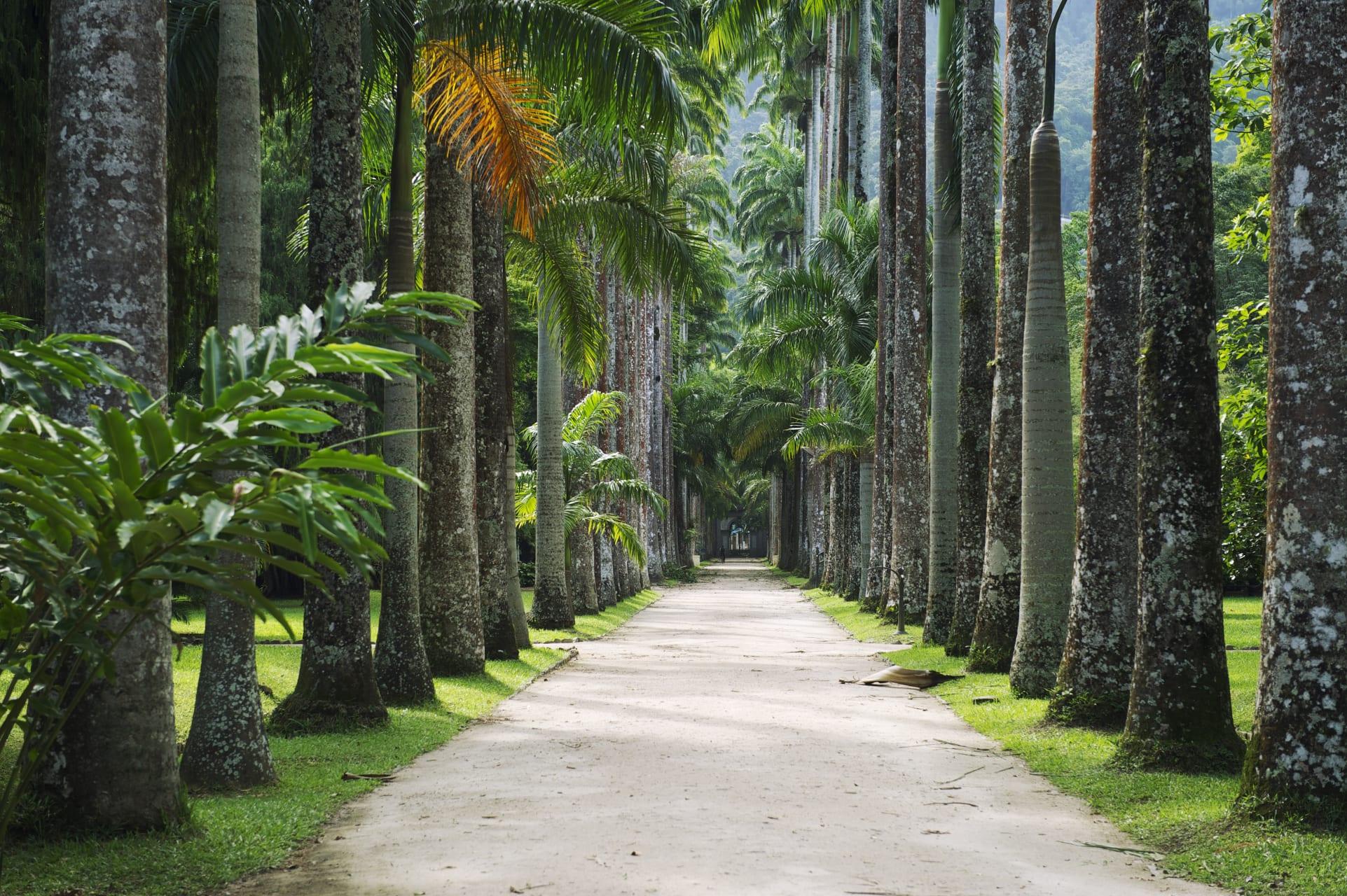 Rio de Janeiro - Jardim Botânico: Rio's Most Beautiful Garden