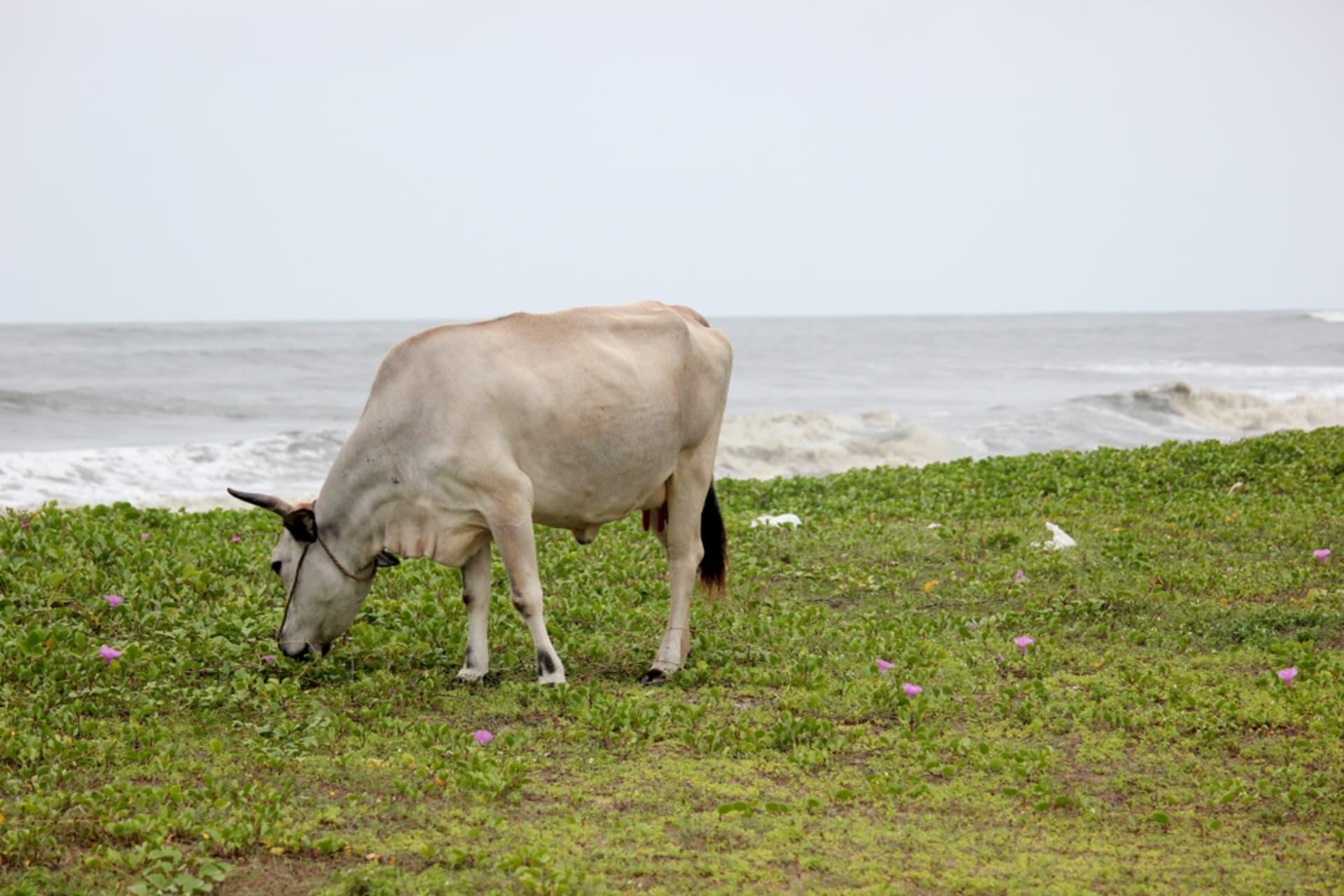 Kerala - Daily Village life of Kerala (Part 2)