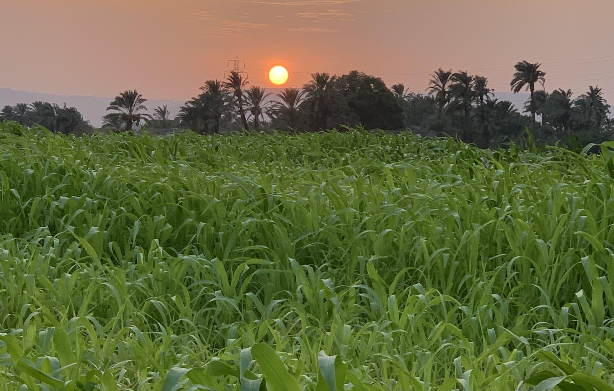 Luxor - Egyptian Farm Tour