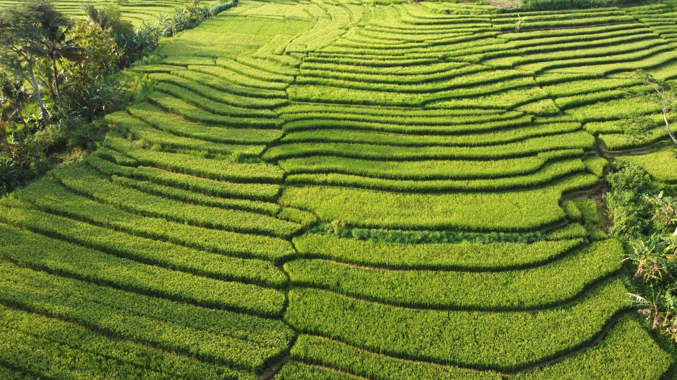 Yogyakarta - Village Life and Local Farming in Yogyakarta