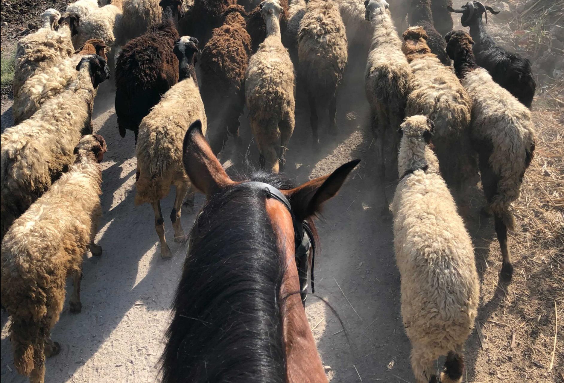 Luxor - Rural Egypt On Horseback