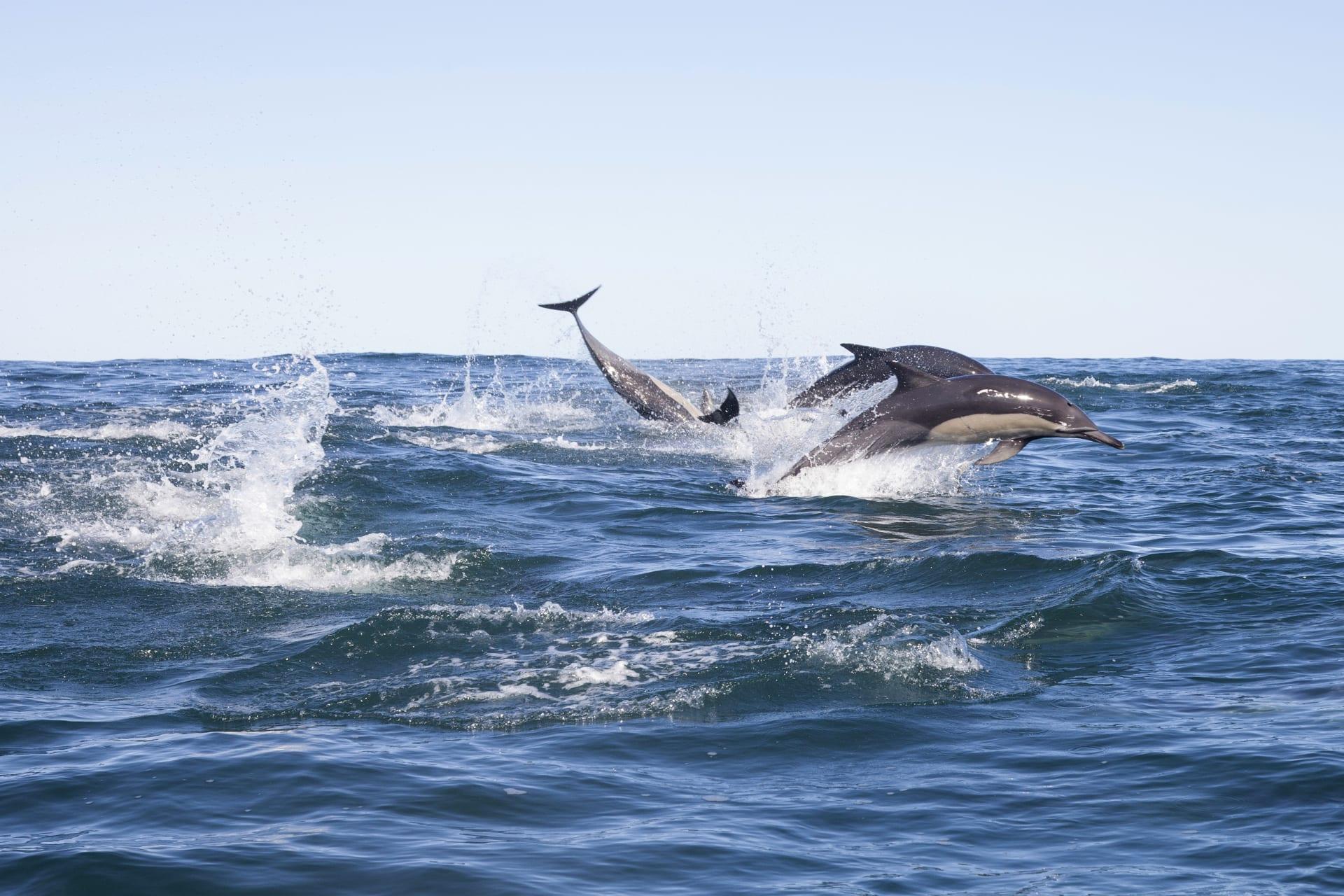 Saint Lucia - The Sardine Run: The Greatest Shoal on Earth (By Sea)