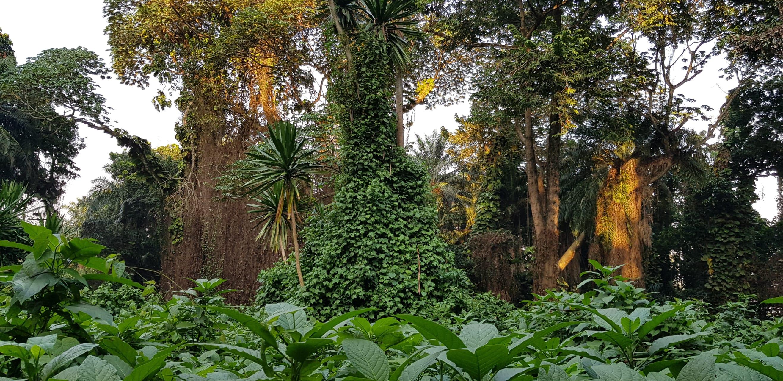 Entebbe - Imperial Botanical Gardens: Beautiful Lake Victoria Steps!
