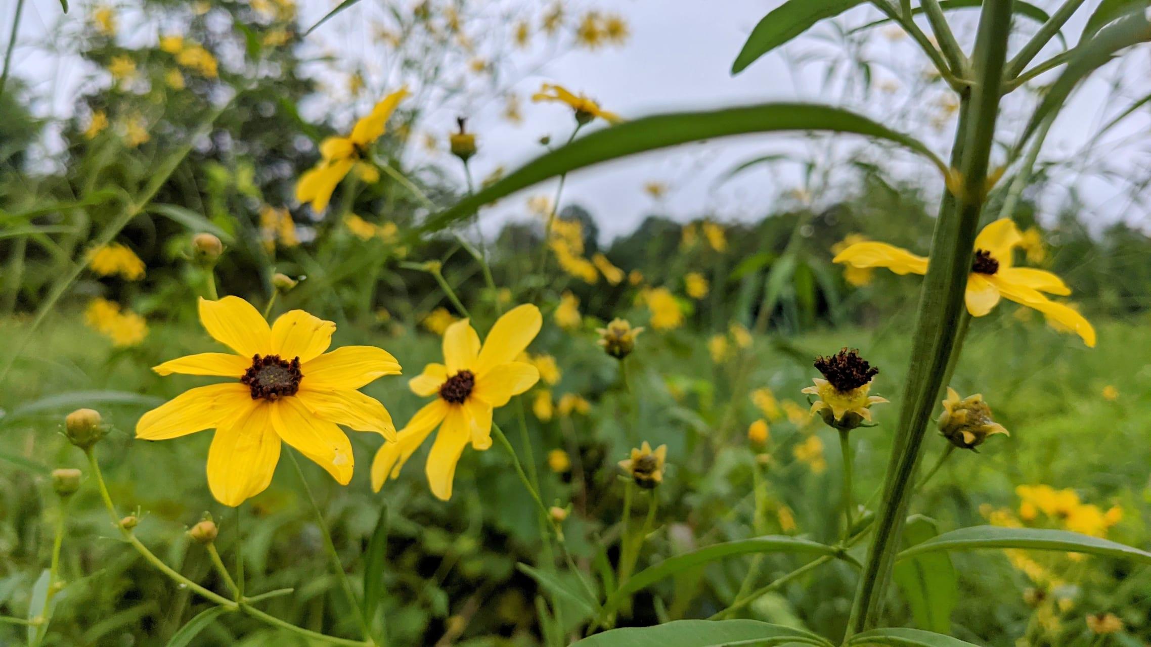 Pennsylvania - Meandering through the Meadow